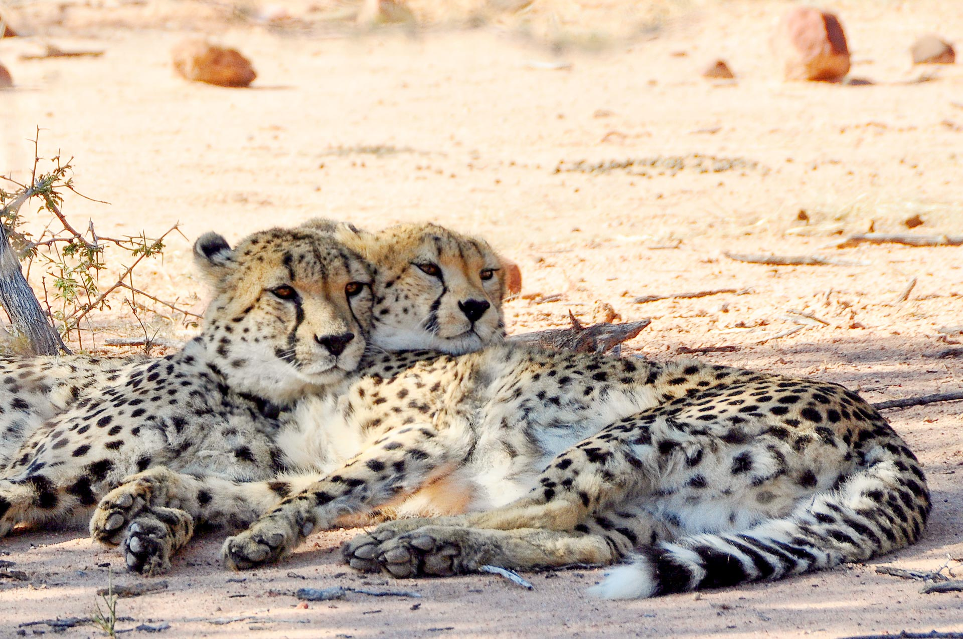 Okonjima-Namibia-Globetrotter-Select-13