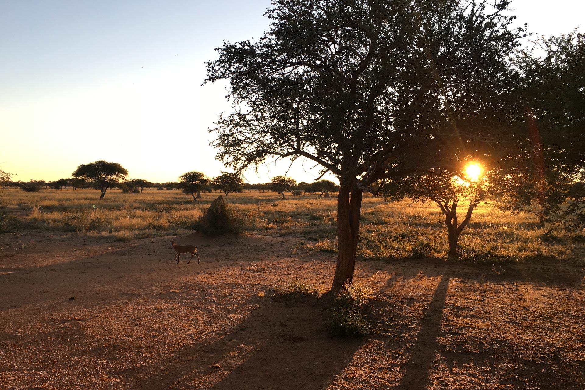 Okonjima-Namibia-Globetrotter-Select-2
