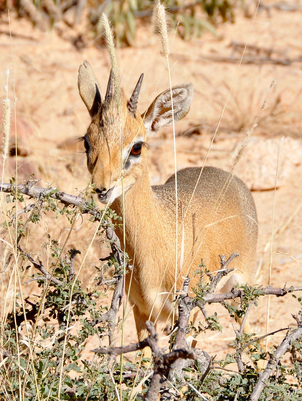 Okonjima-Namibia-Globetrotter-Select-23