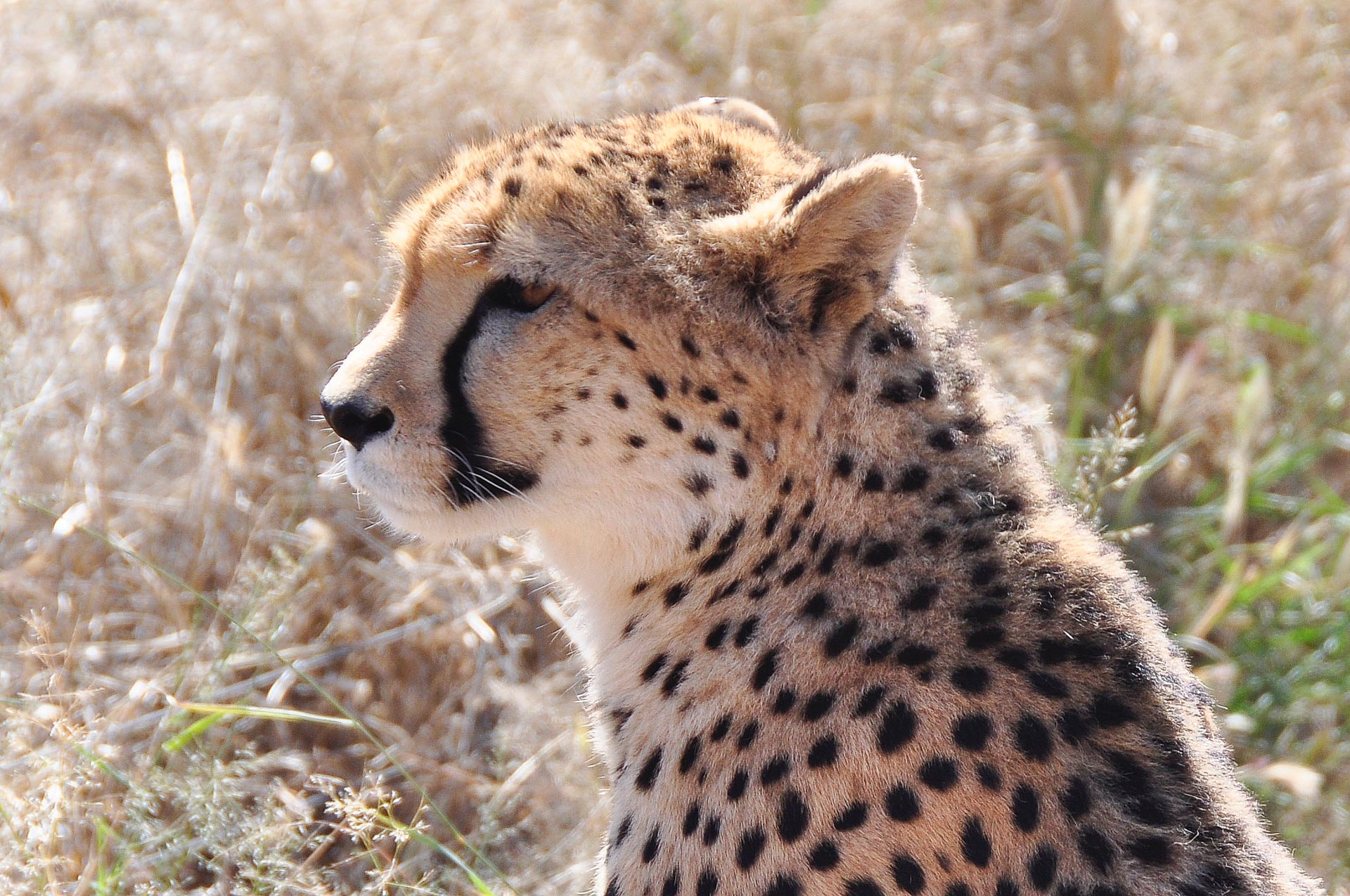 Okonjima-Namibia-Globetrotter-Select-24
