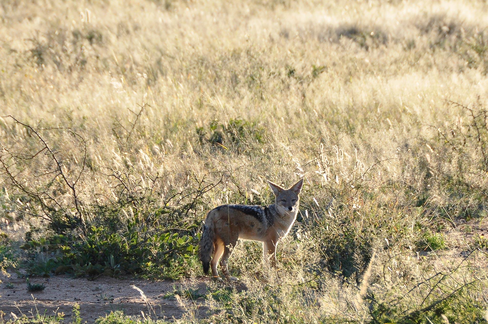 Okonjima-Namibia-Globetrotter-Select-4