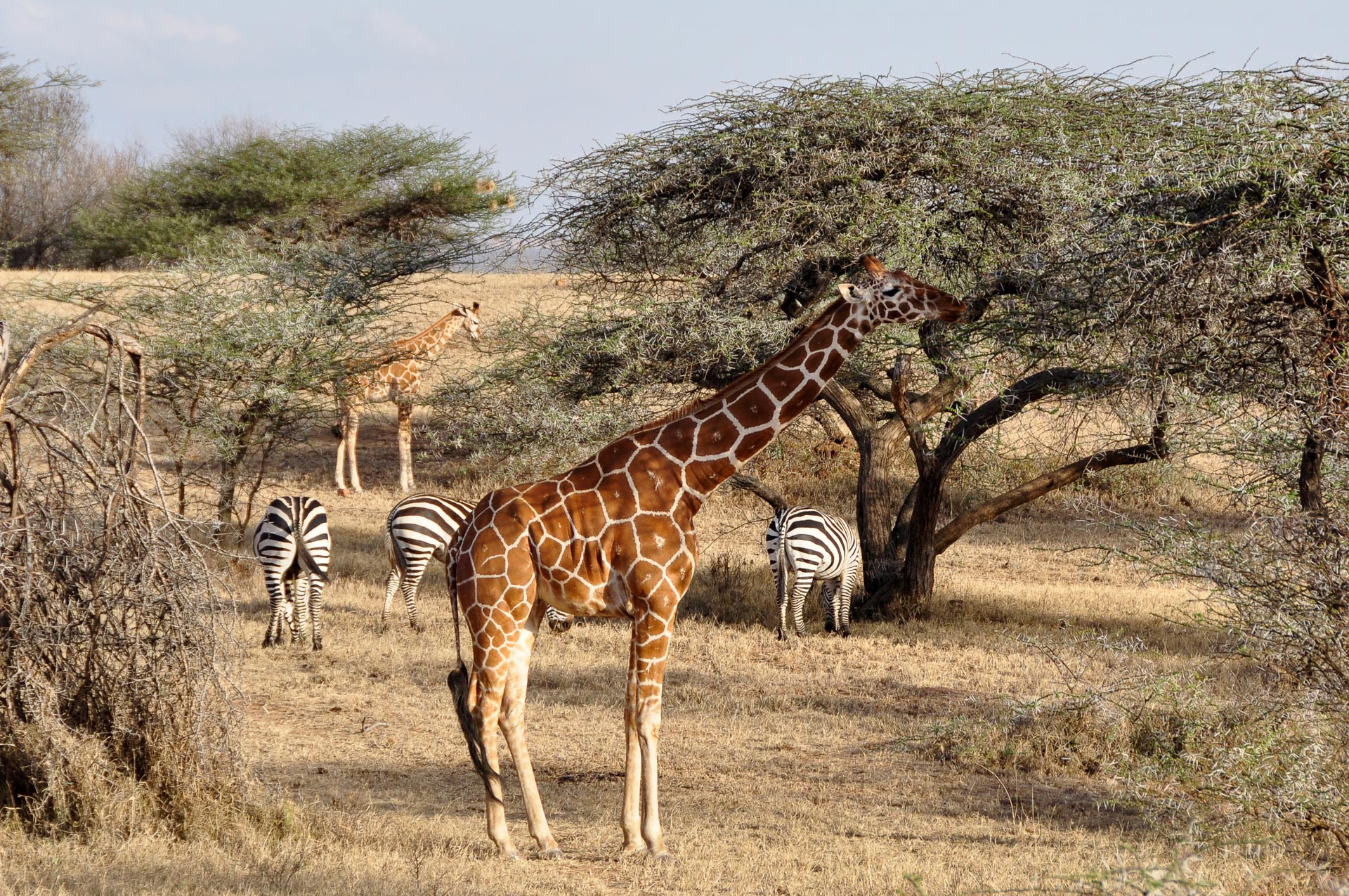 Ol-Malo-Laikipia-Kenia-Globetrotter-Select-17