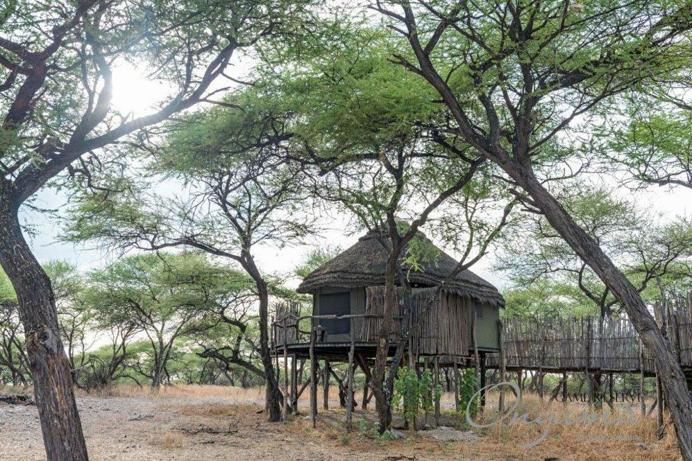 Onguma Tree Tops (9 von 9)