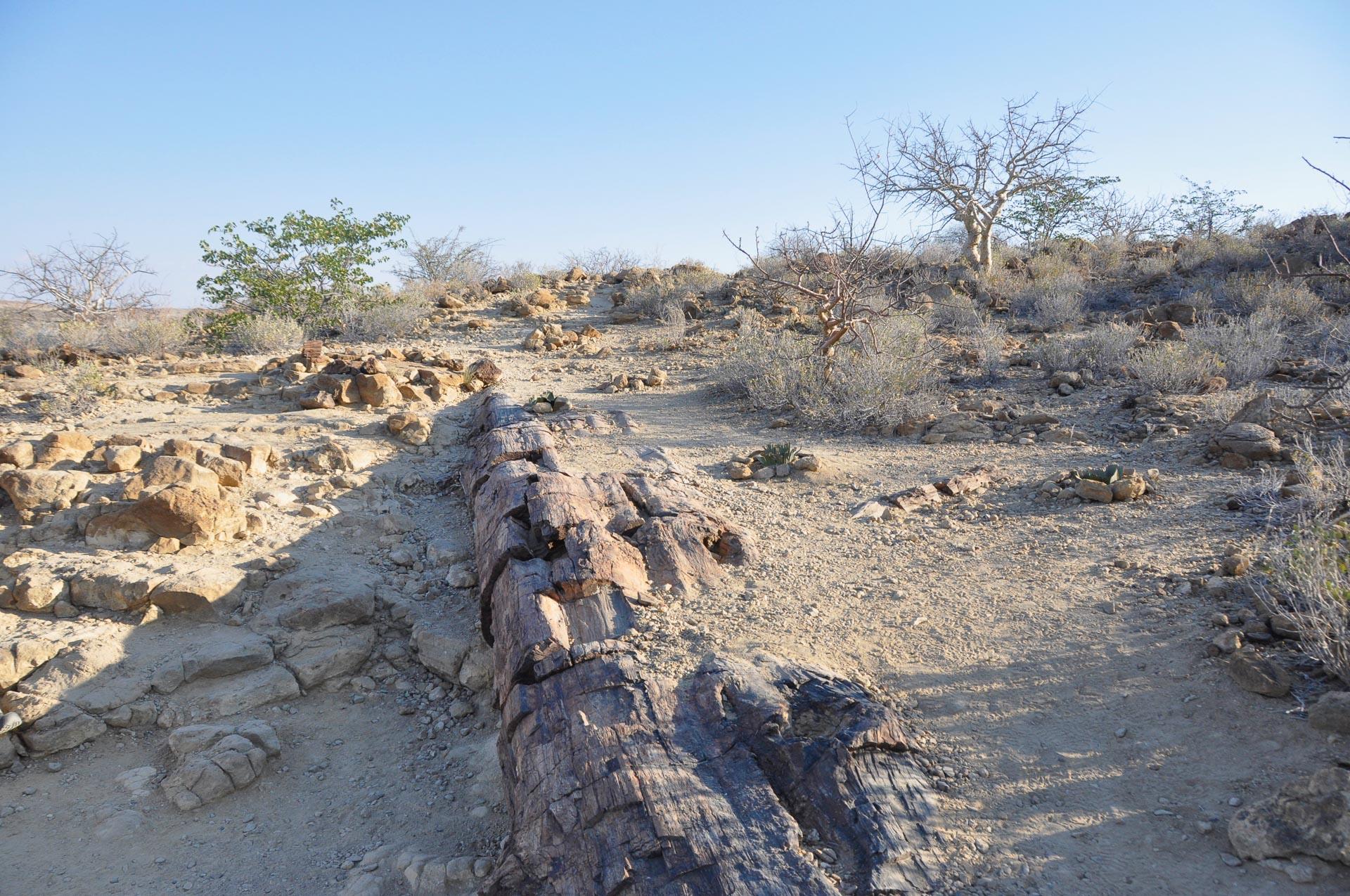 Petrified-Forest-Namibia-Globetrotter-Select-2