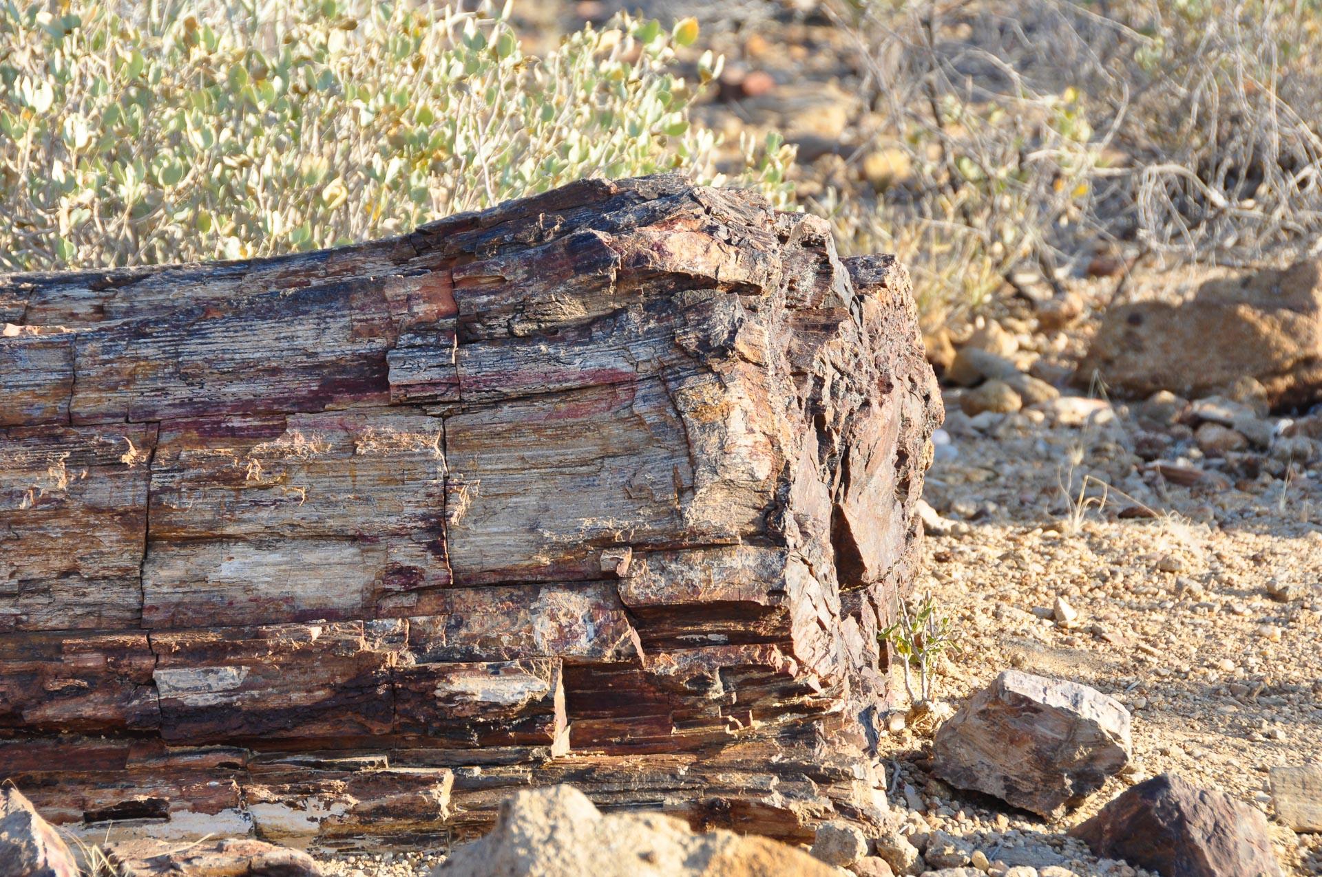 Petrified-Forest-Namibia-Globetrotter-Select-8