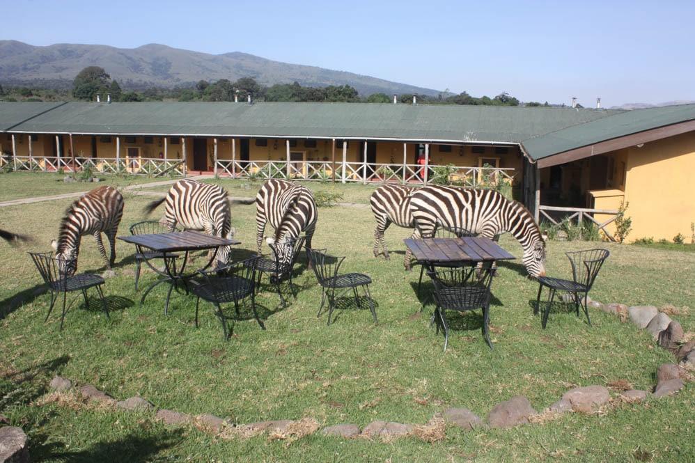 Rhino Lodge (8 von 9)