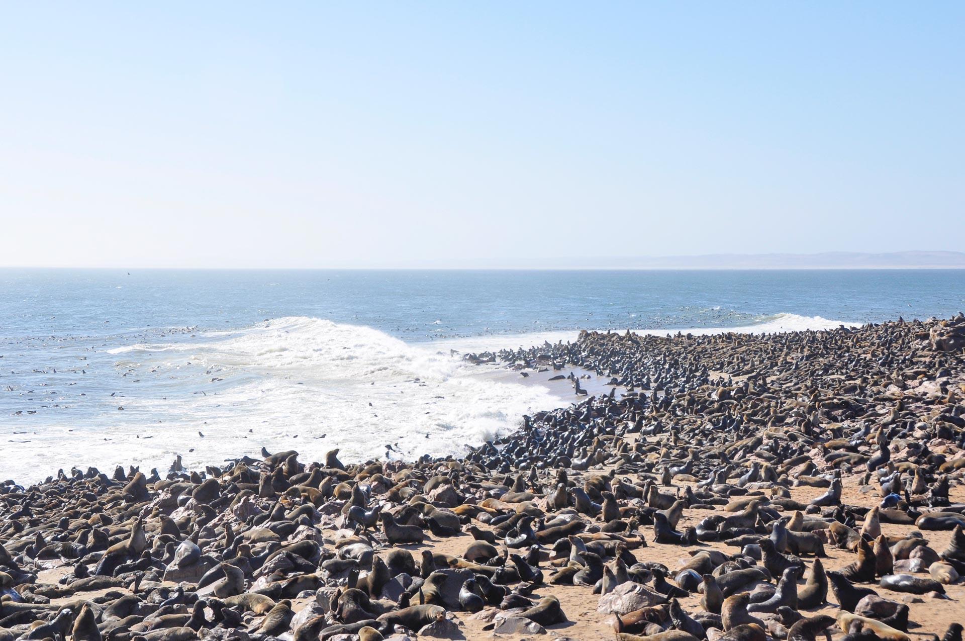 Robben-Cape-Cross-Namibia-Globetrotter-Select-17