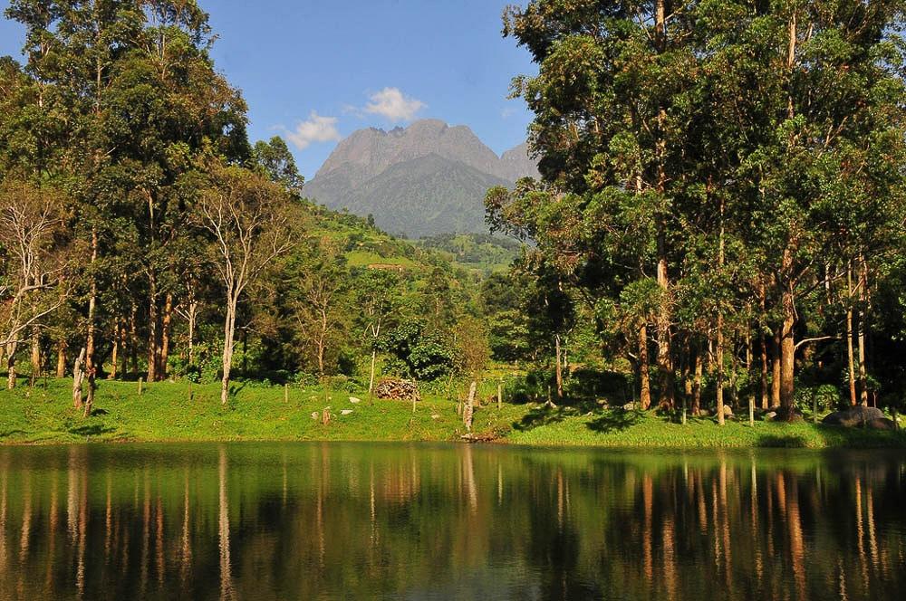 Ruwenzori-Uganda-Wildlife-Authority-UWA-6