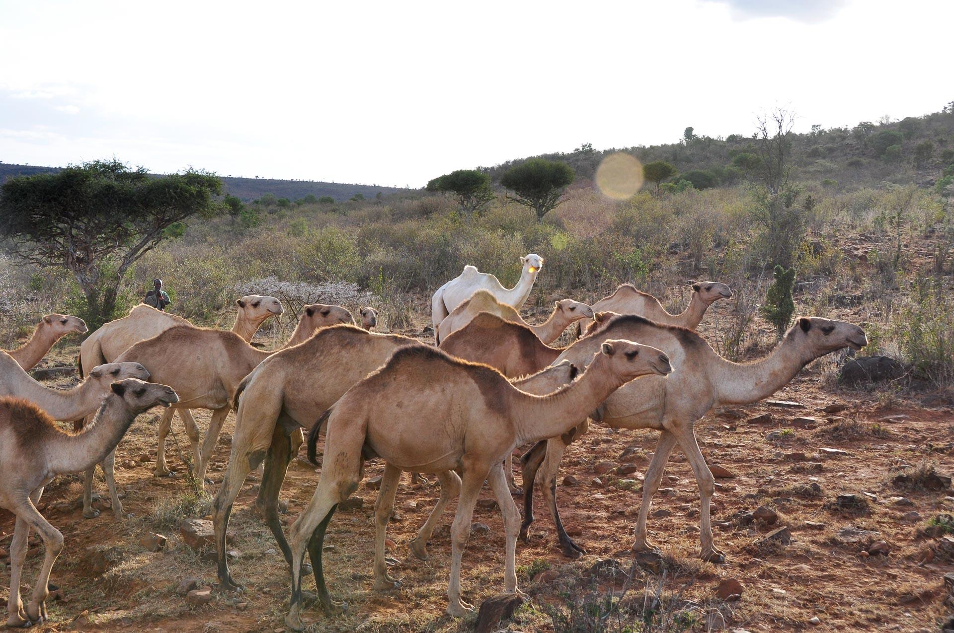 Samburu-Menschen-Kenia-Globetrotter-Select-2