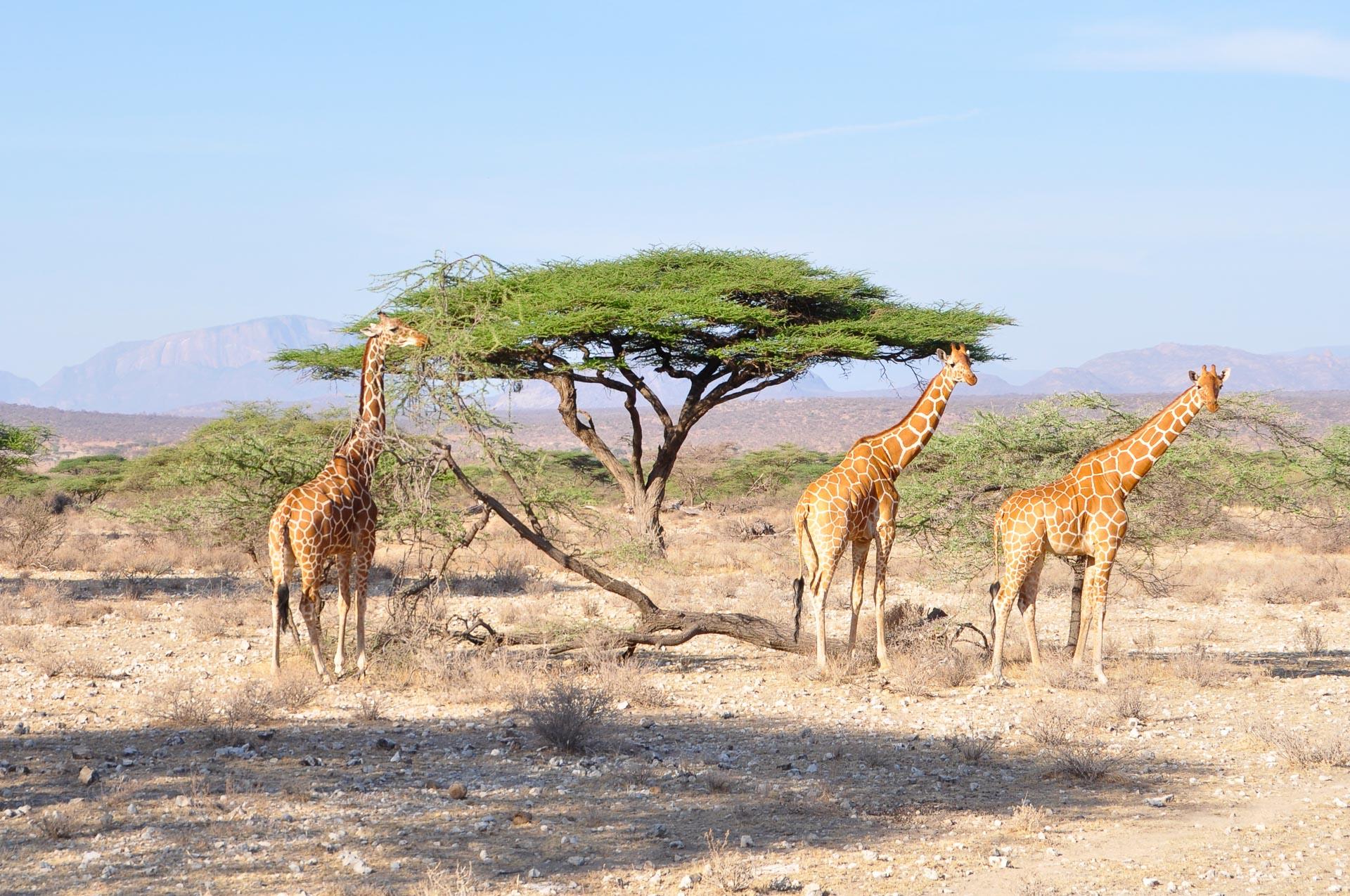 Samburu-Nationalpark-Kenia-Globetrotter-Select-11