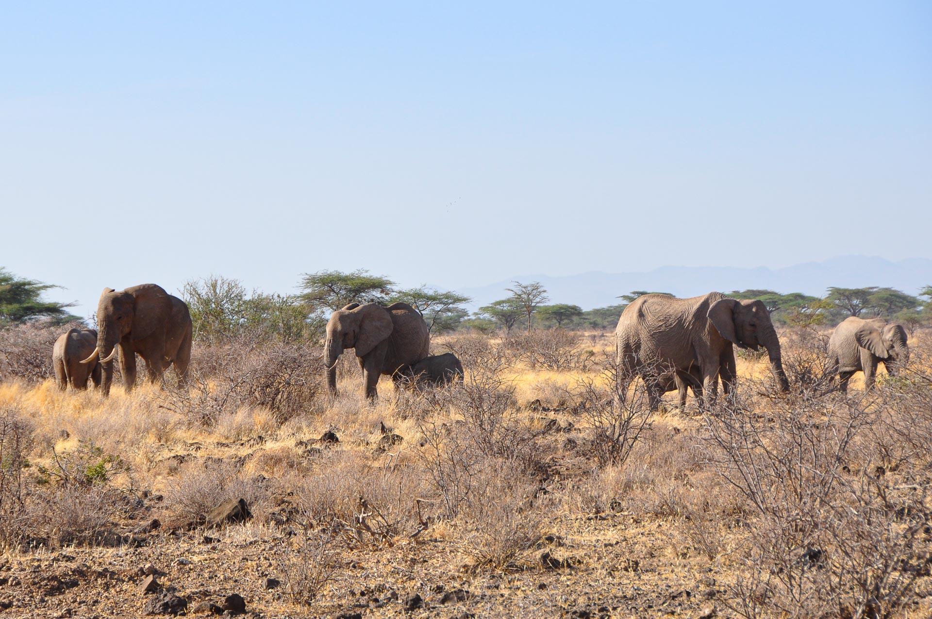 Samburu-Nationalpark-Kenia-Globetrotter-Select-12