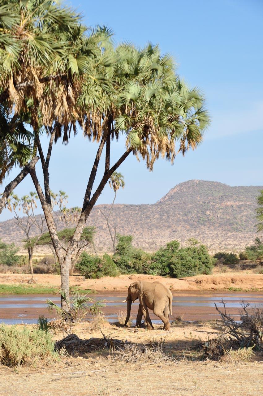 Samburu-Nationalpark-Kenia-Globetrotter-Select-14