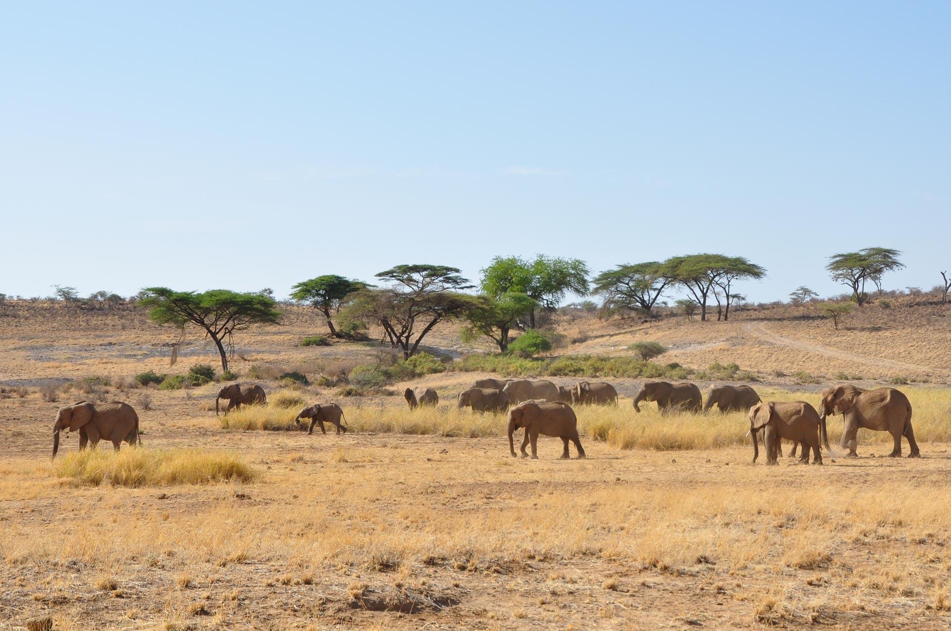 Samburu-Nationalpark-Kenia-Globetrotter-Select-19
