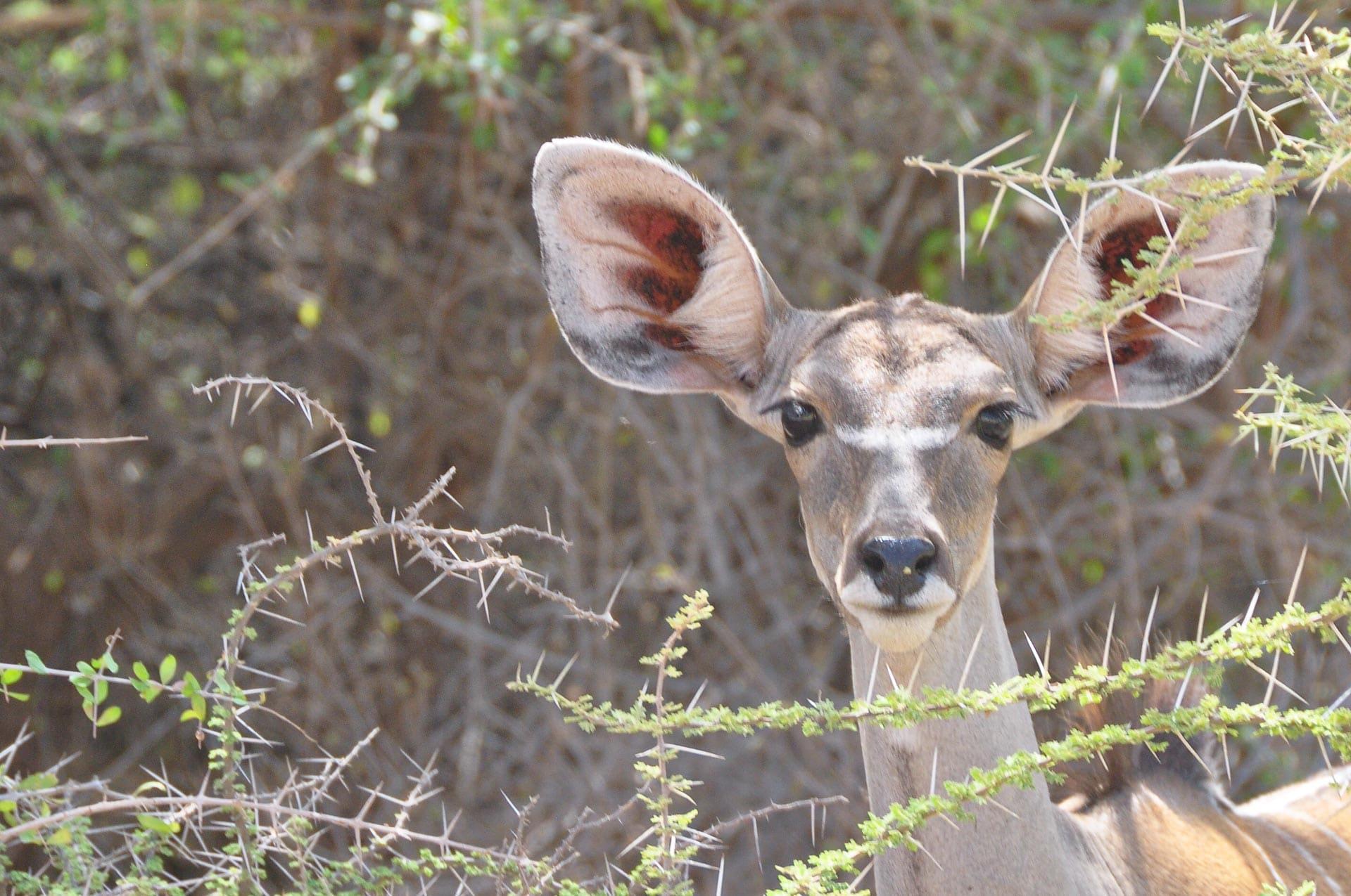 Samburu-Nationalpark-Kenia-Globetrotter-Select-2