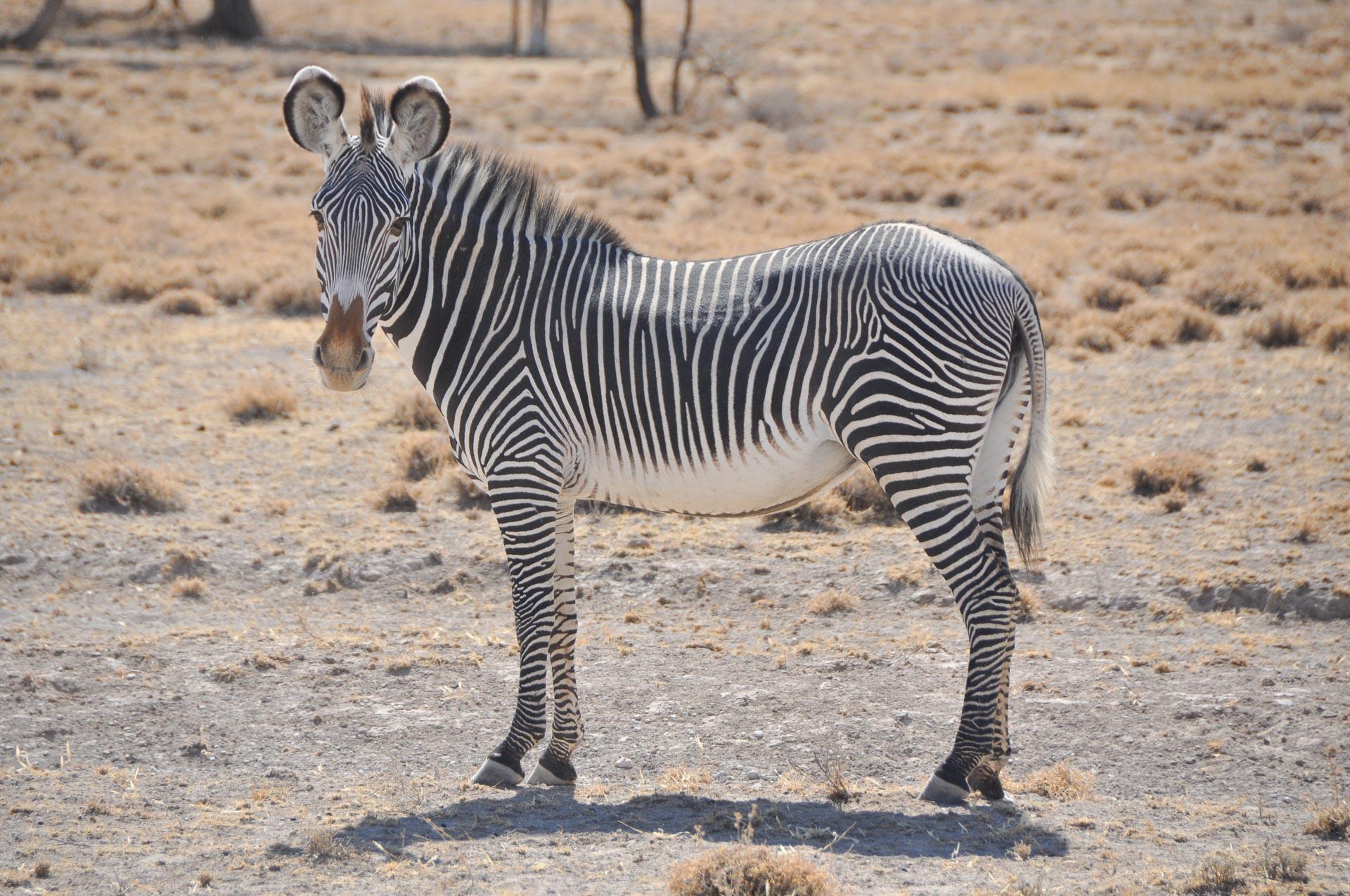 Samburu-Nationalpark-Kenia-Globetrotter-Select-21