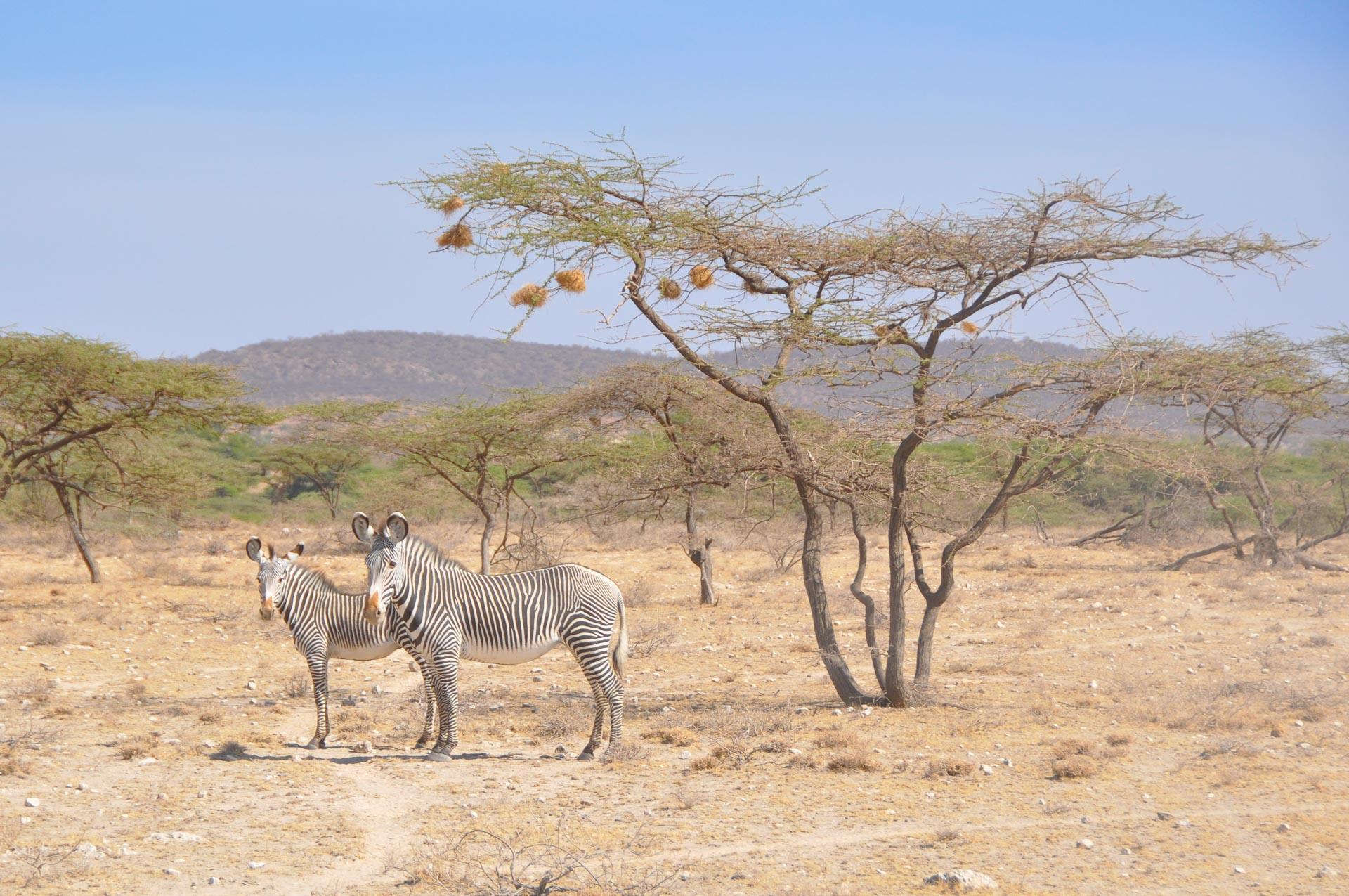 Samburu-Nationalpark-Kenia-Globetrotter-Select-23
