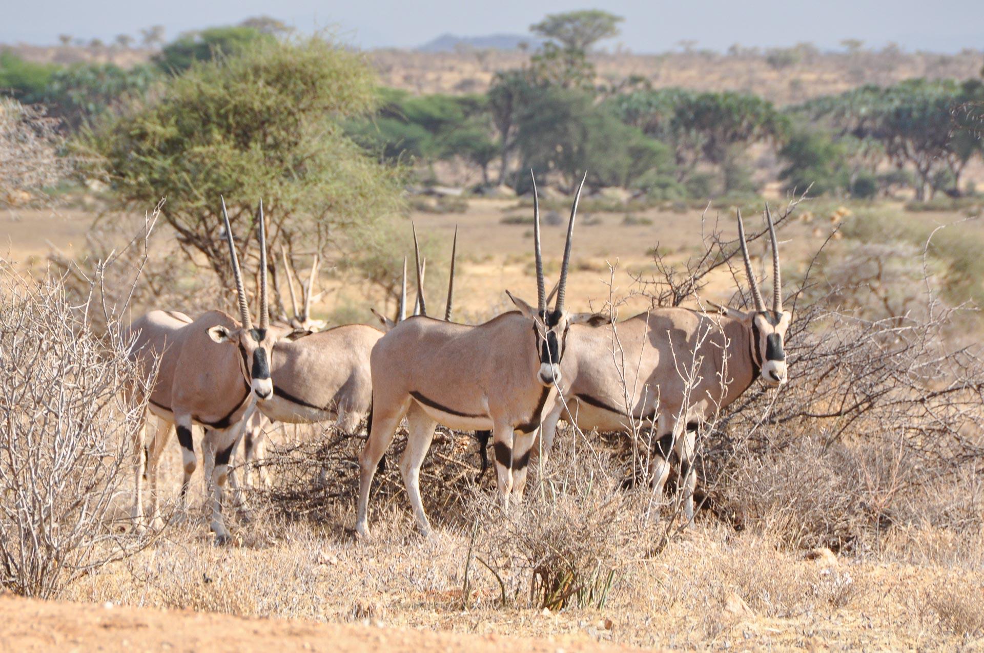 Samburu-Nationalpark-Kenia-Globetrotter-Select-8