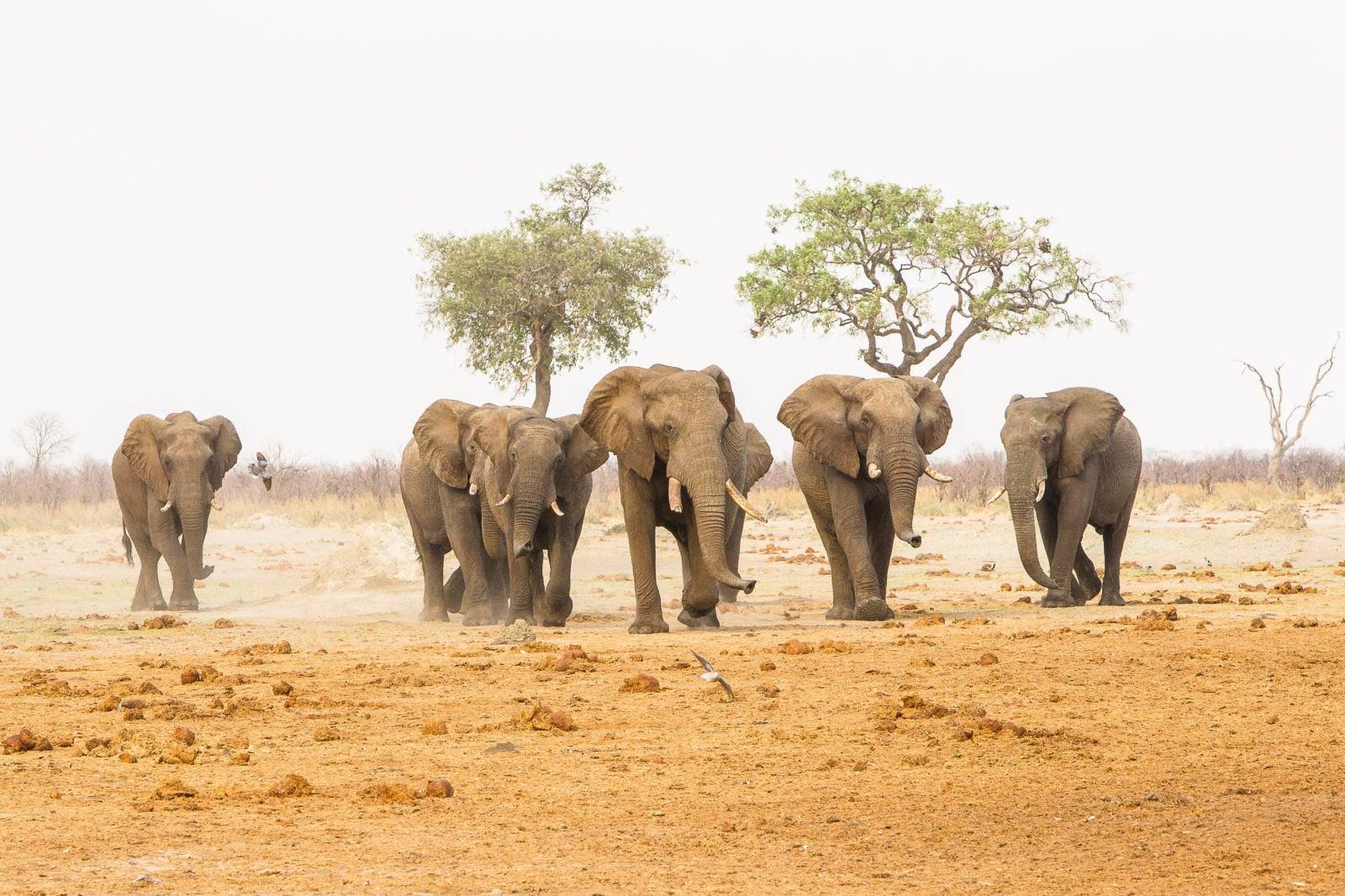Savuti-Safari-Lodge-Botswana-13