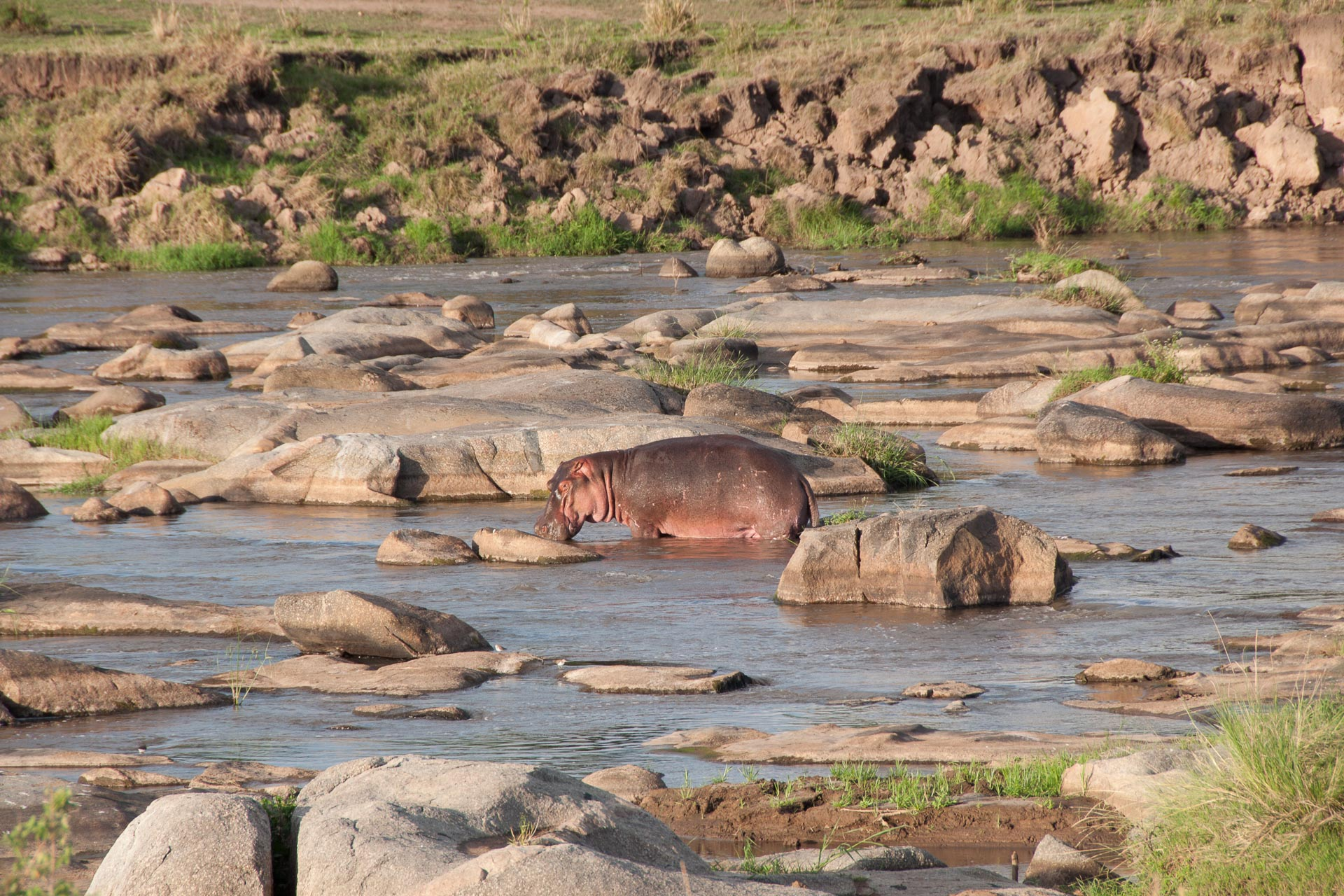 Serengeti-NationalparkTansania-Globetrotter-Select-001