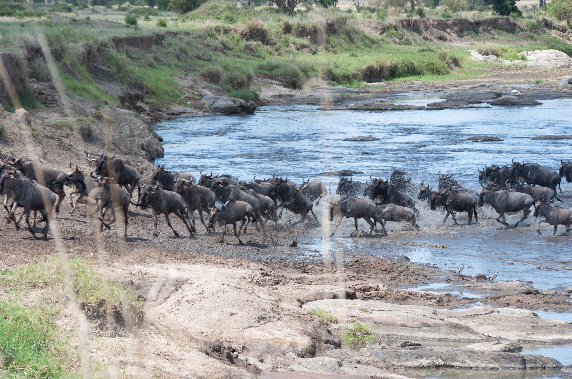 Serengeti-NationalparkTansania-Globetrotter-Select-003