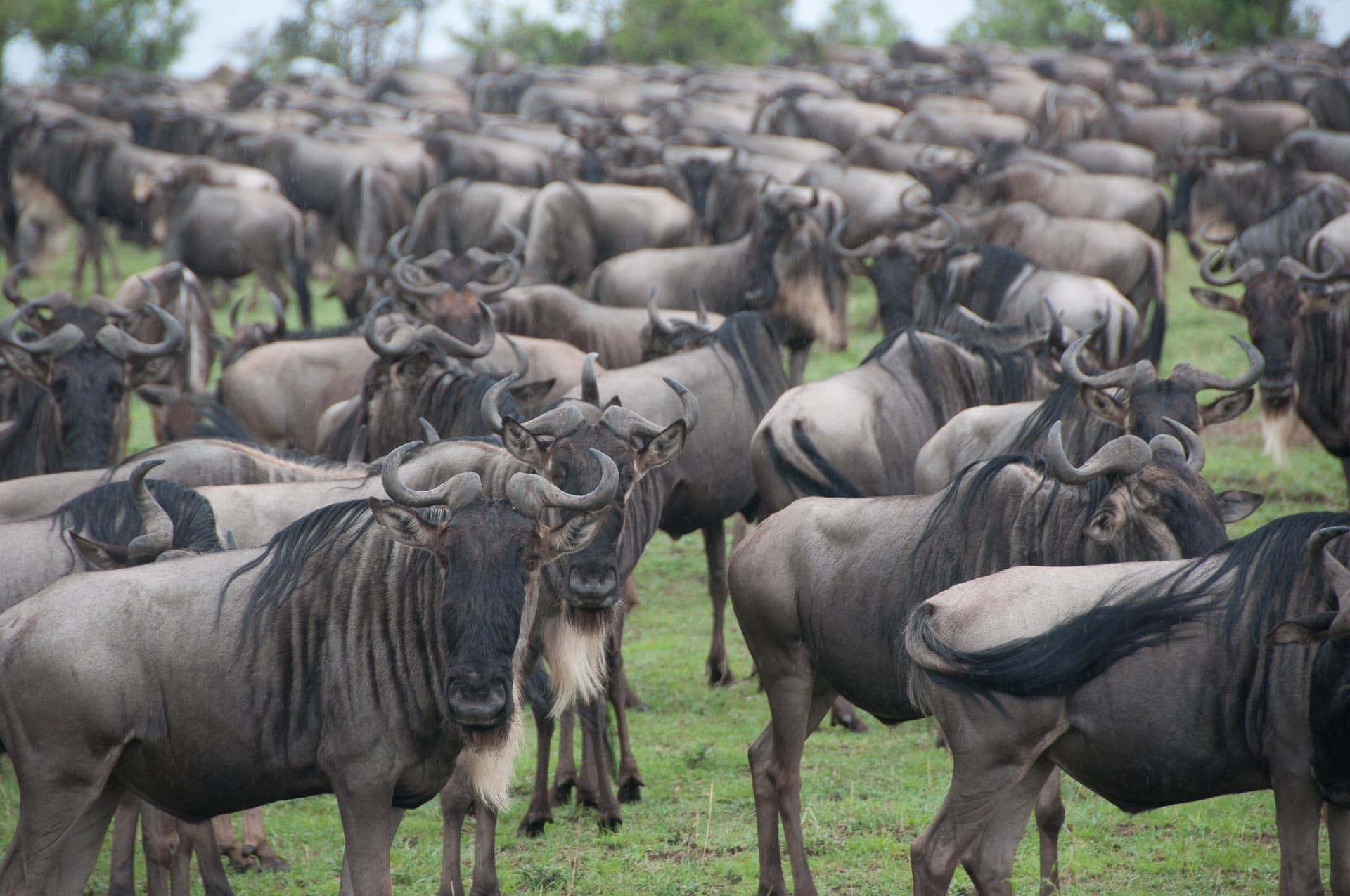 Serengeti-NationalparkTansania-Globetrotter-Select-008