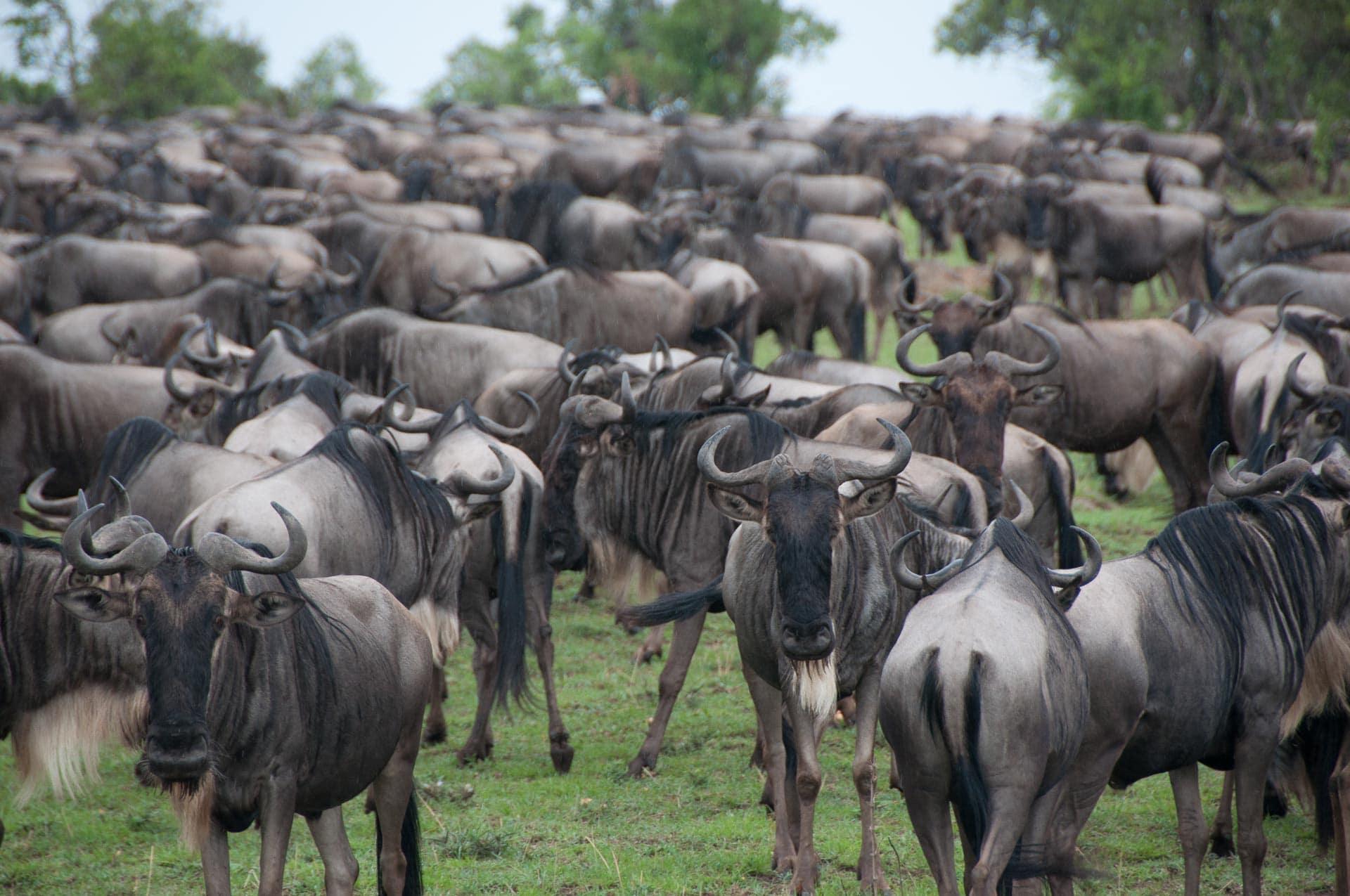 Serengeti-NationalparkTansania-Globetrotter-Select-009