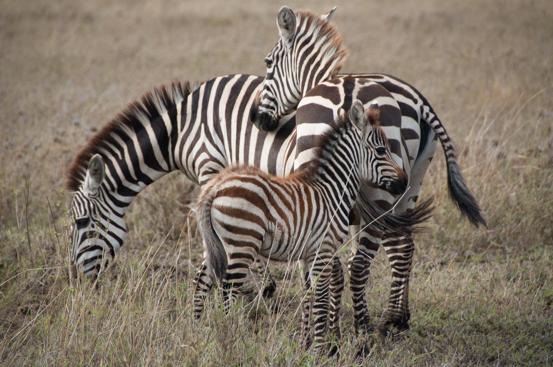 Serengeti-NationalparkTansania-Globetrotter-Select-018