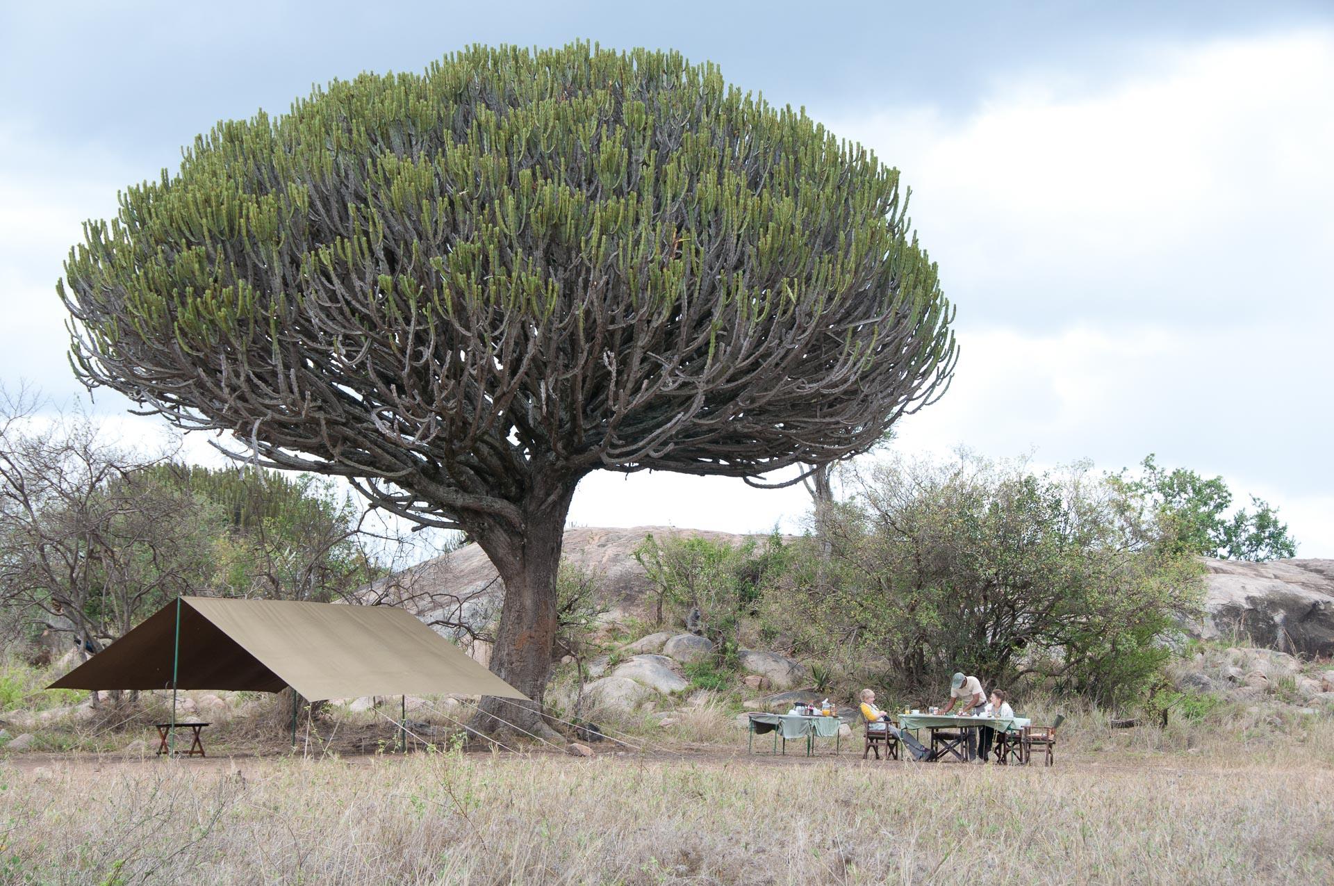 Serengeti-NationalparkTansania-Globetrotter-Select-019