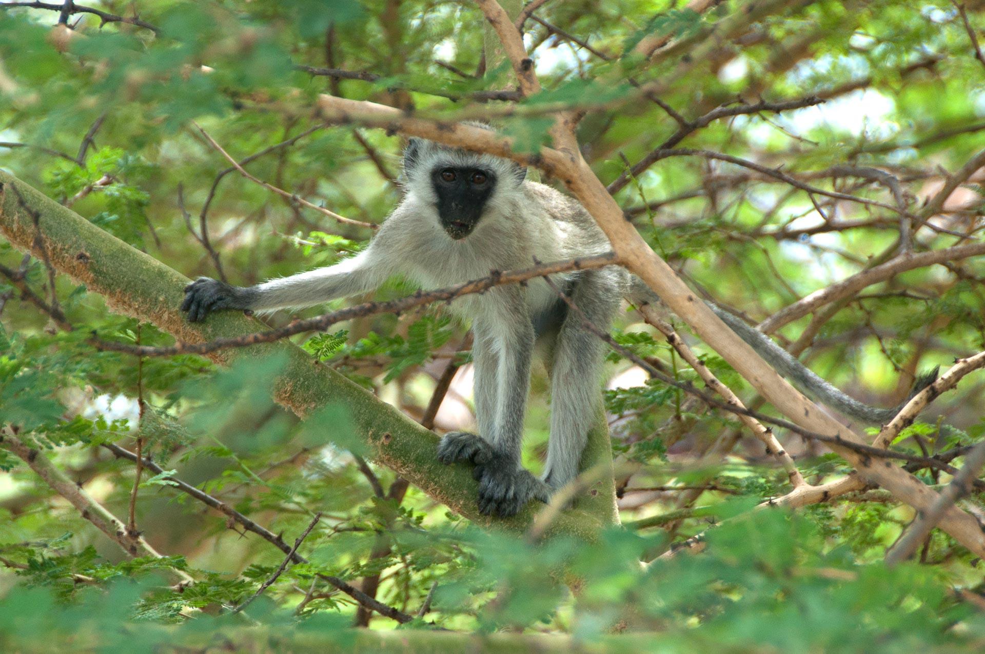Serengeti-NationalparkTansania-Globetrotter-Select-021
