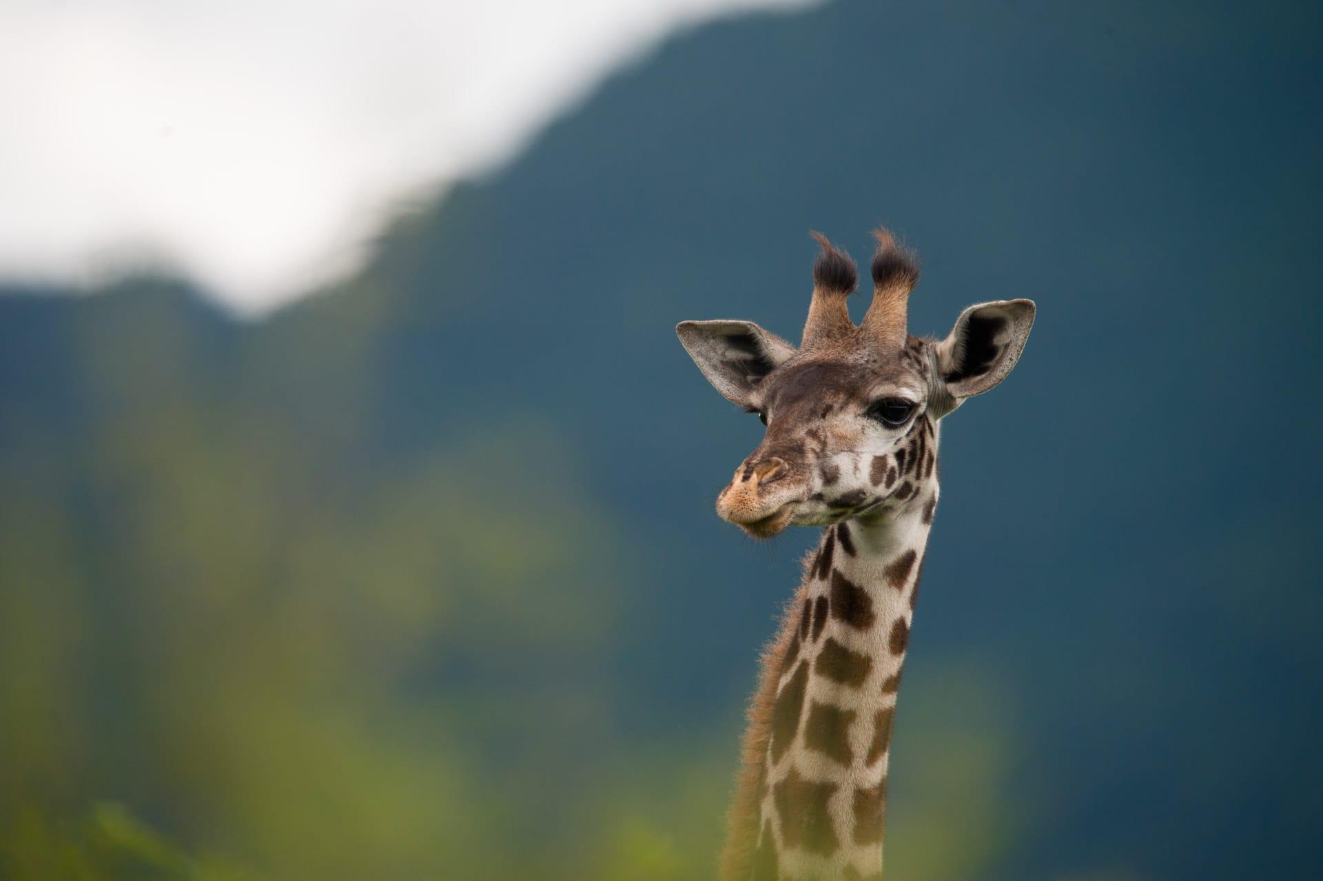 Serengeti-Tansania-Globetrotter-Select-GLenz-1