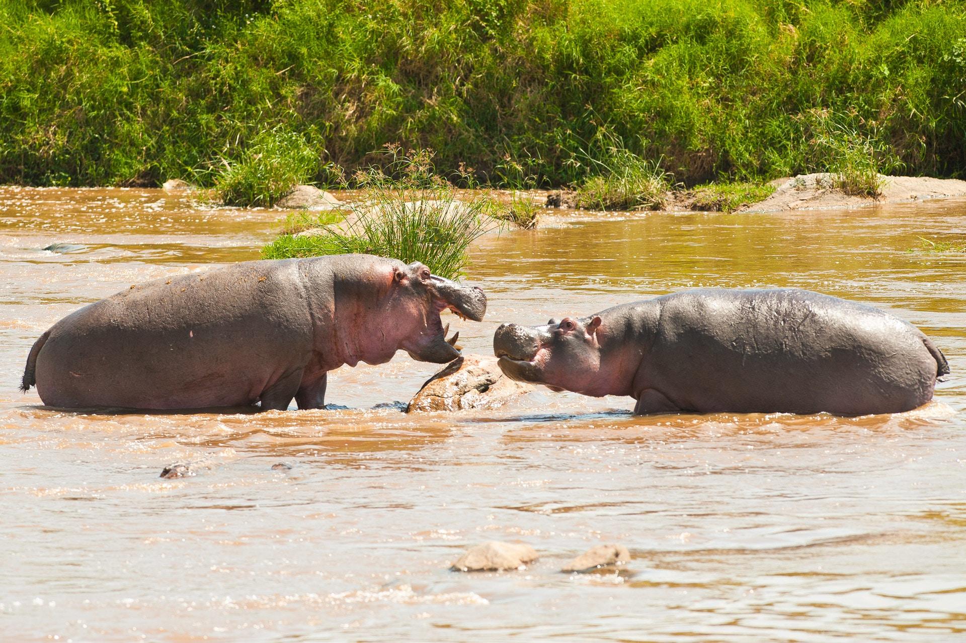 Serengeti-Tansania-Globetrotter-Select-GLenz-46