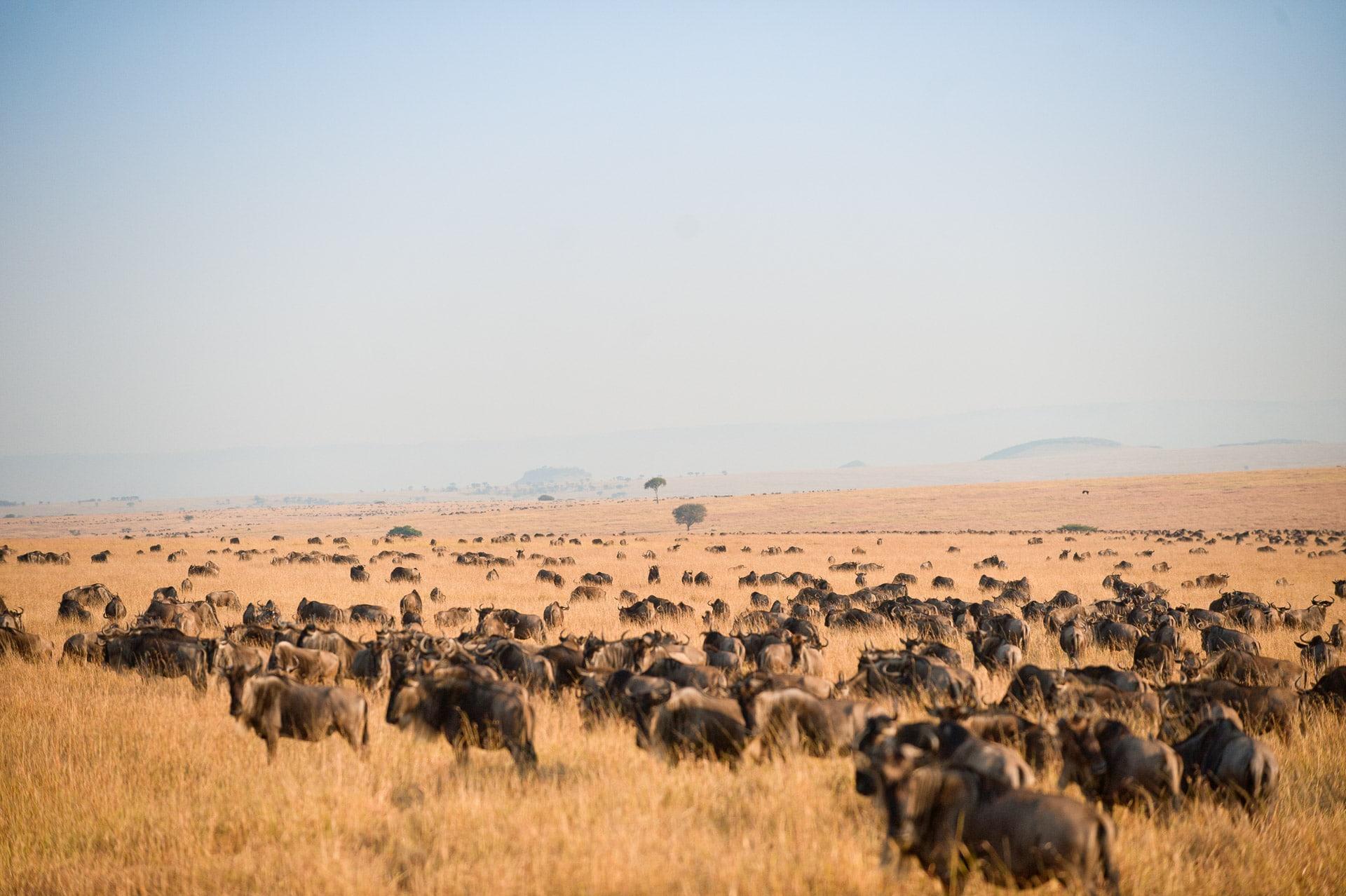 Serengeti-Tansania-Globetrotter-Select-GLenz-48