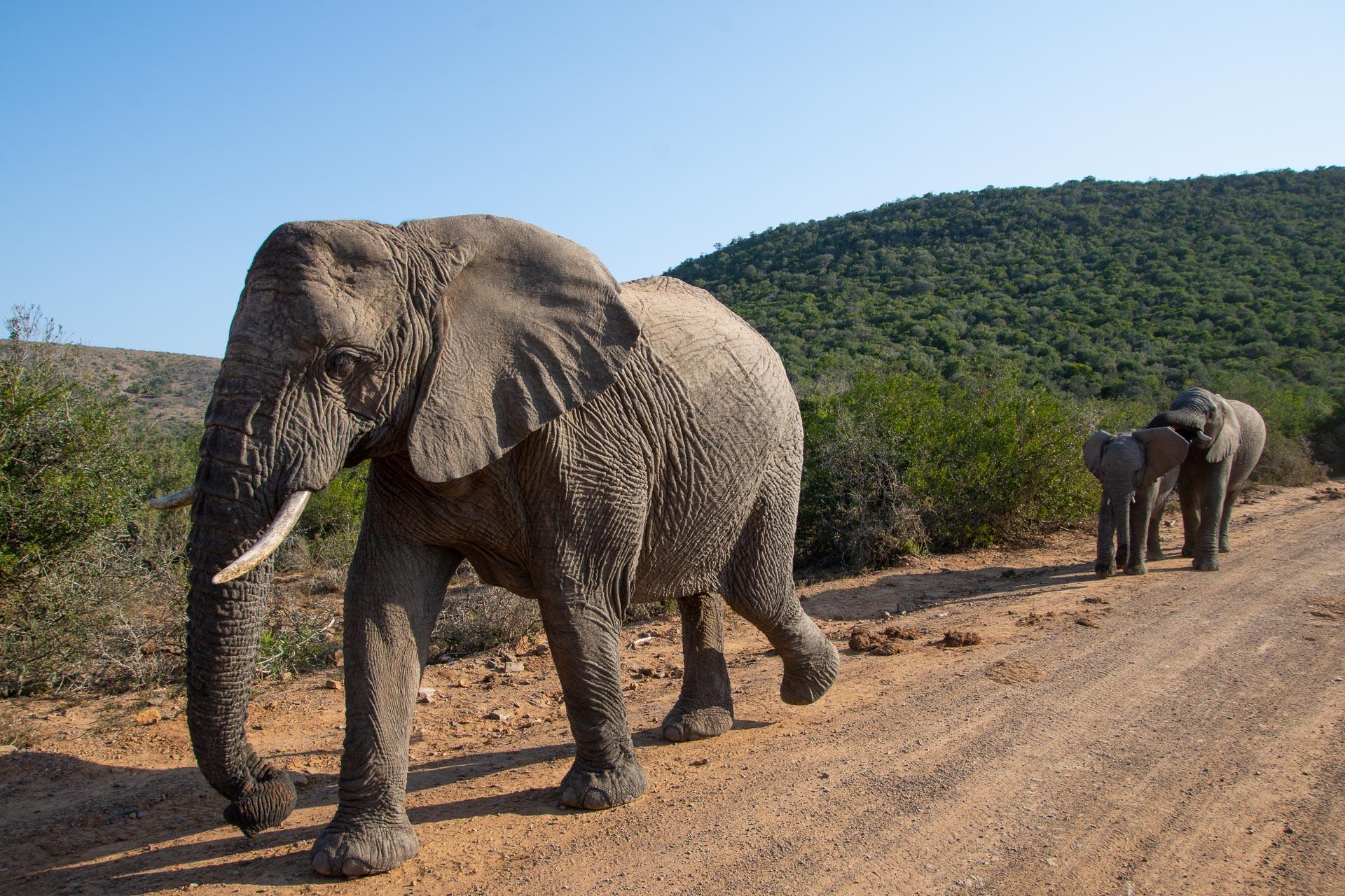Shamwari-Suedafrika-Globetrotter-Select-1