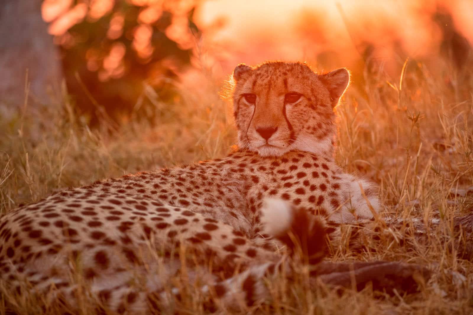 Shinde-Camp-Okavango-Delta-Botswana-14