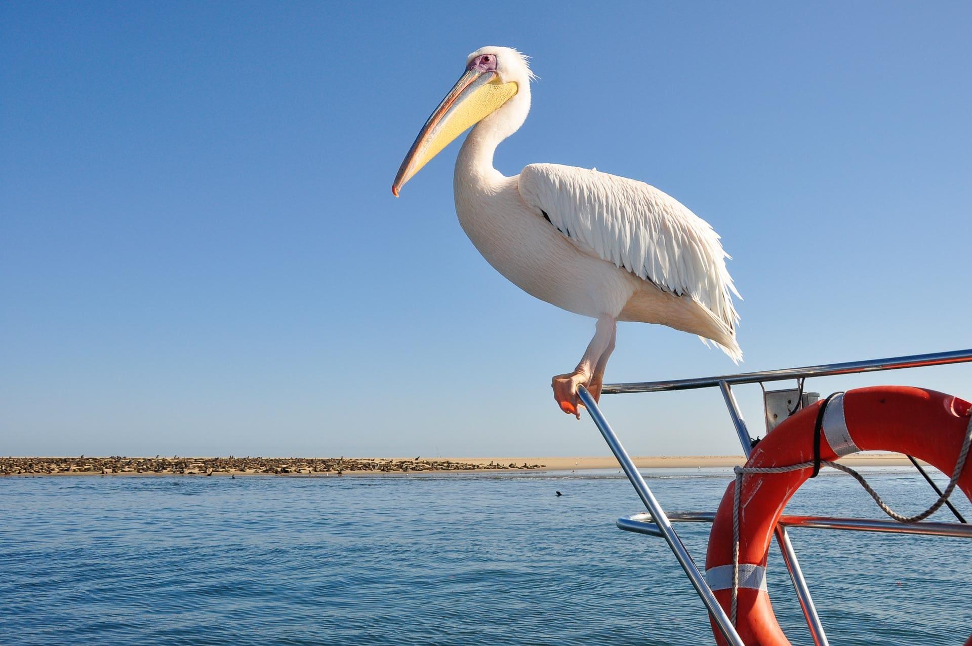 Swakopmund-Catamaran-Walfish-Bay-Namibia-Globetrotter-Select-15