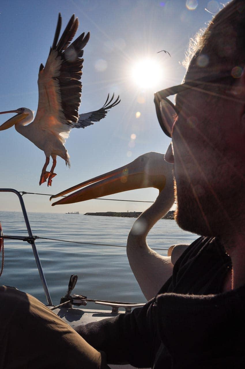 Swakopmund-Catamaran-Walfish-Bay-Namibia-Globetrotter-Select-3
