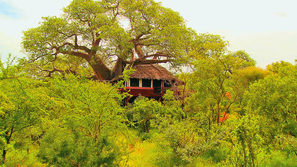 Tarangire Treetops Elewana (3 von 7)-2