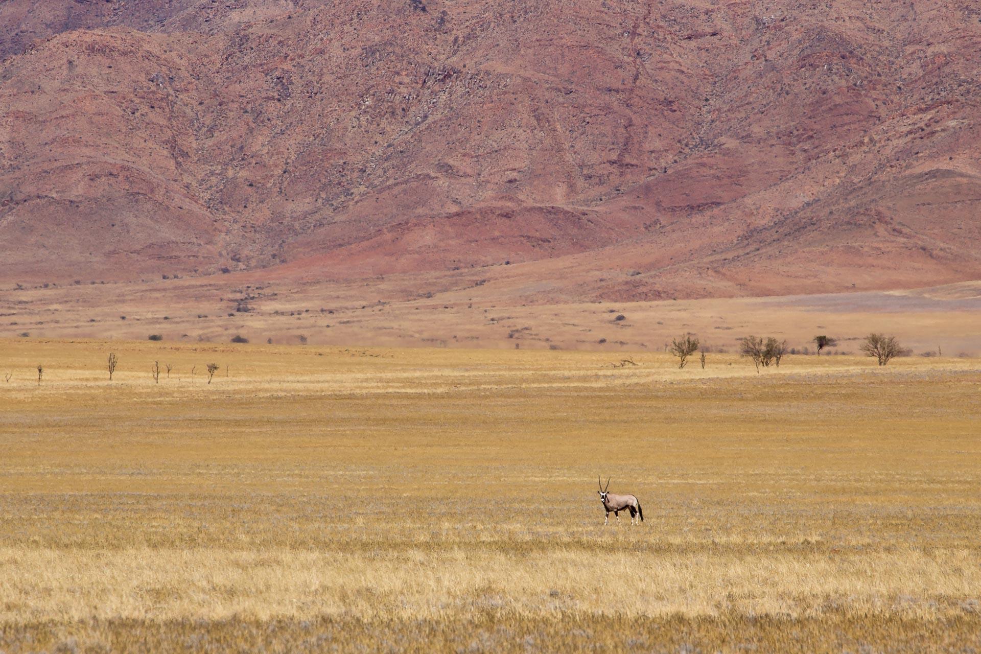 Tok-Tokkie-Trail-Wueste-Namibia-33