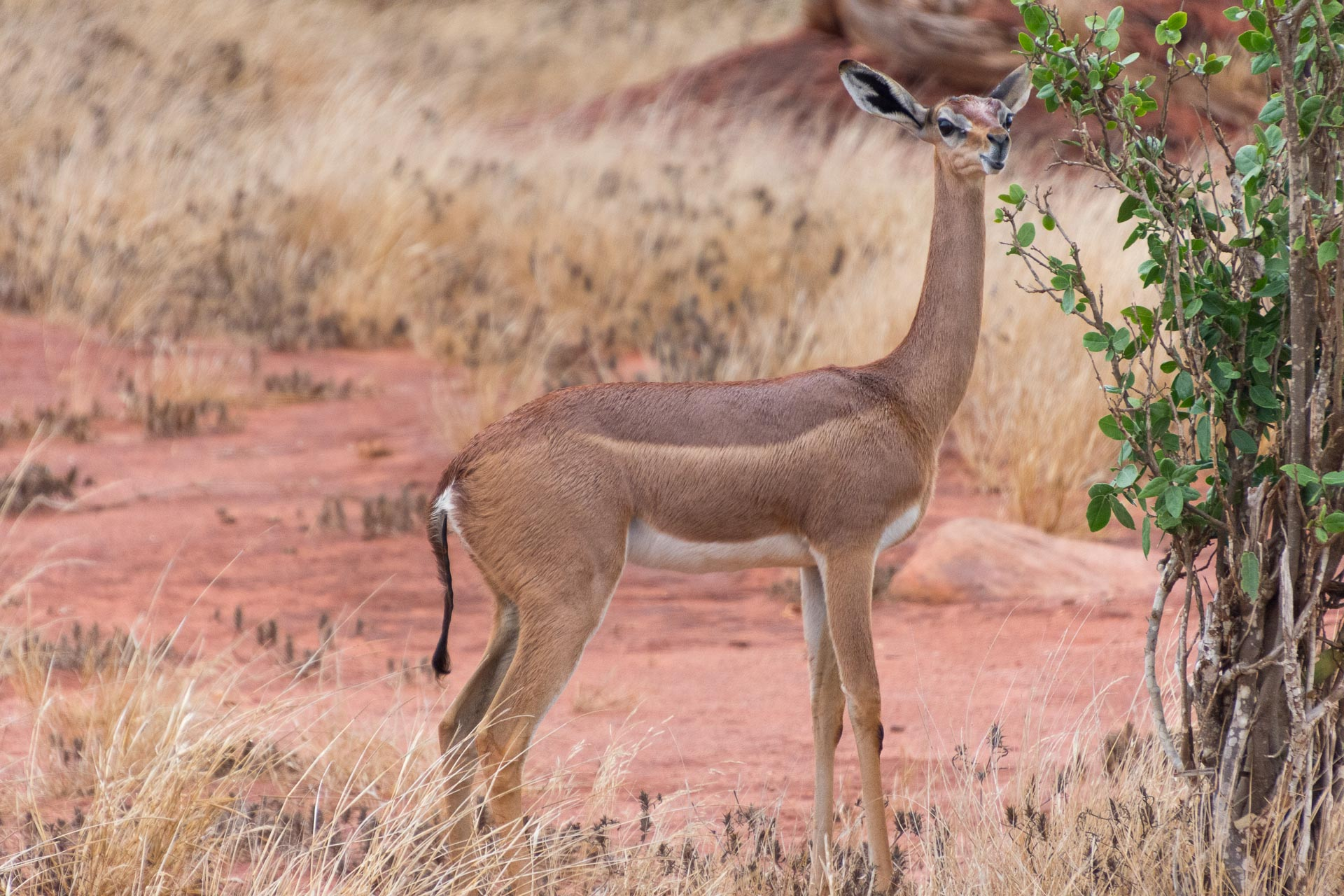 Tsavo-Nationalpark-Kenia-Globetrotter-Select-1