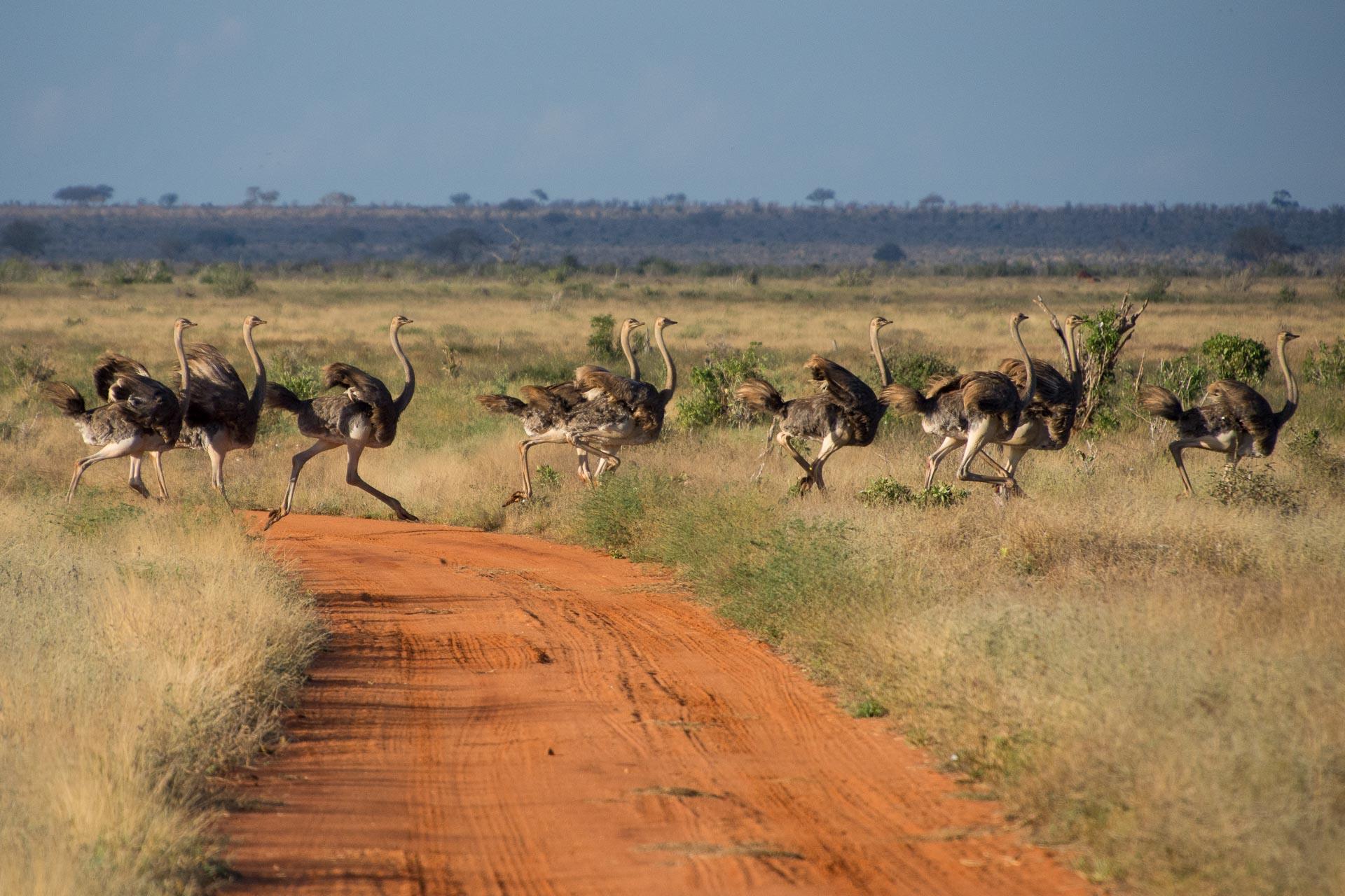 Tsavo-Nationalpark-Kenia-Globetrotter-Select-16