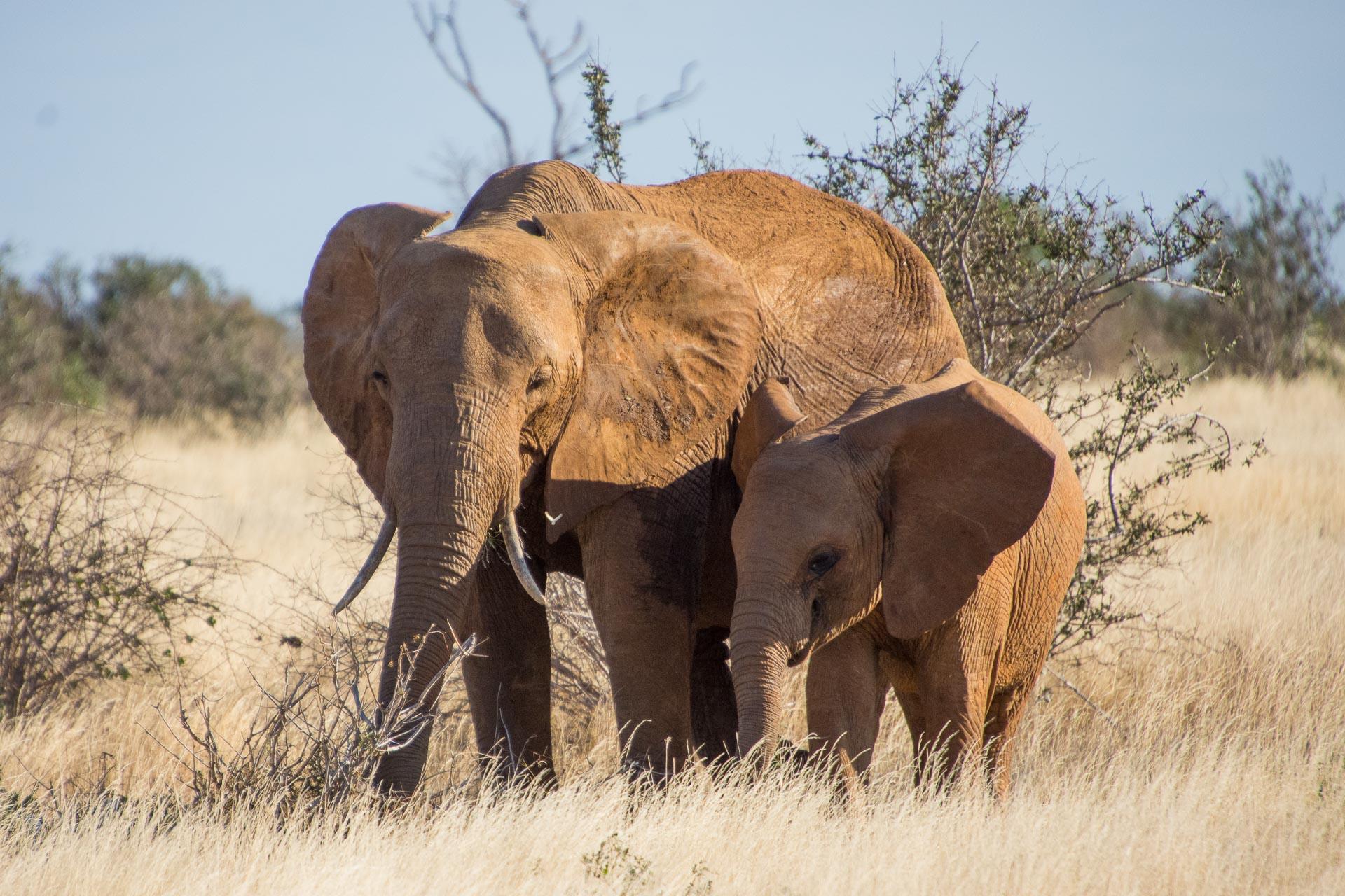 Tsavo-Nationalpark-Kenia-Globetrotter-Select-17