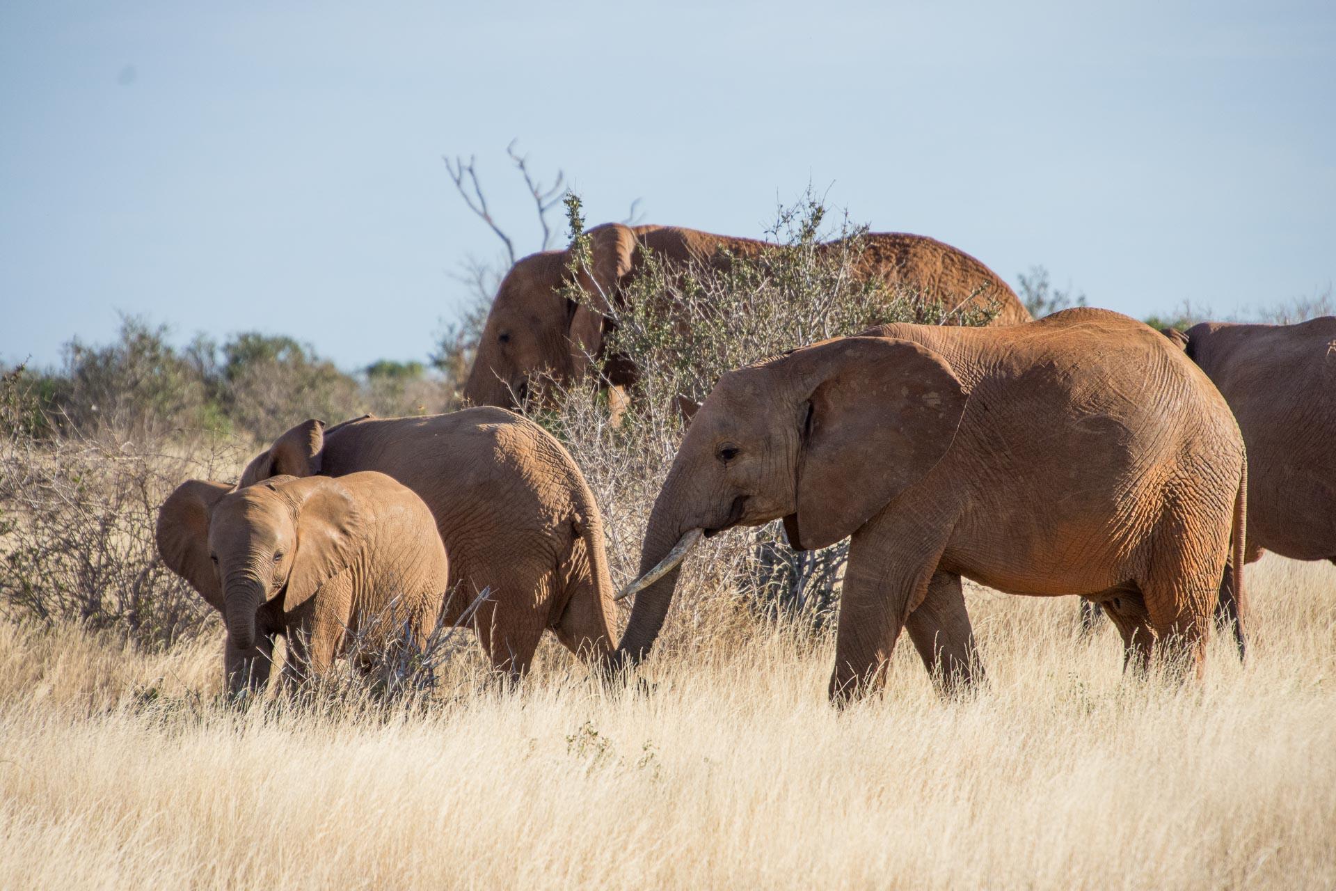 Tsavo-Nationalpark-Kenia-Globetrotter-Select-19