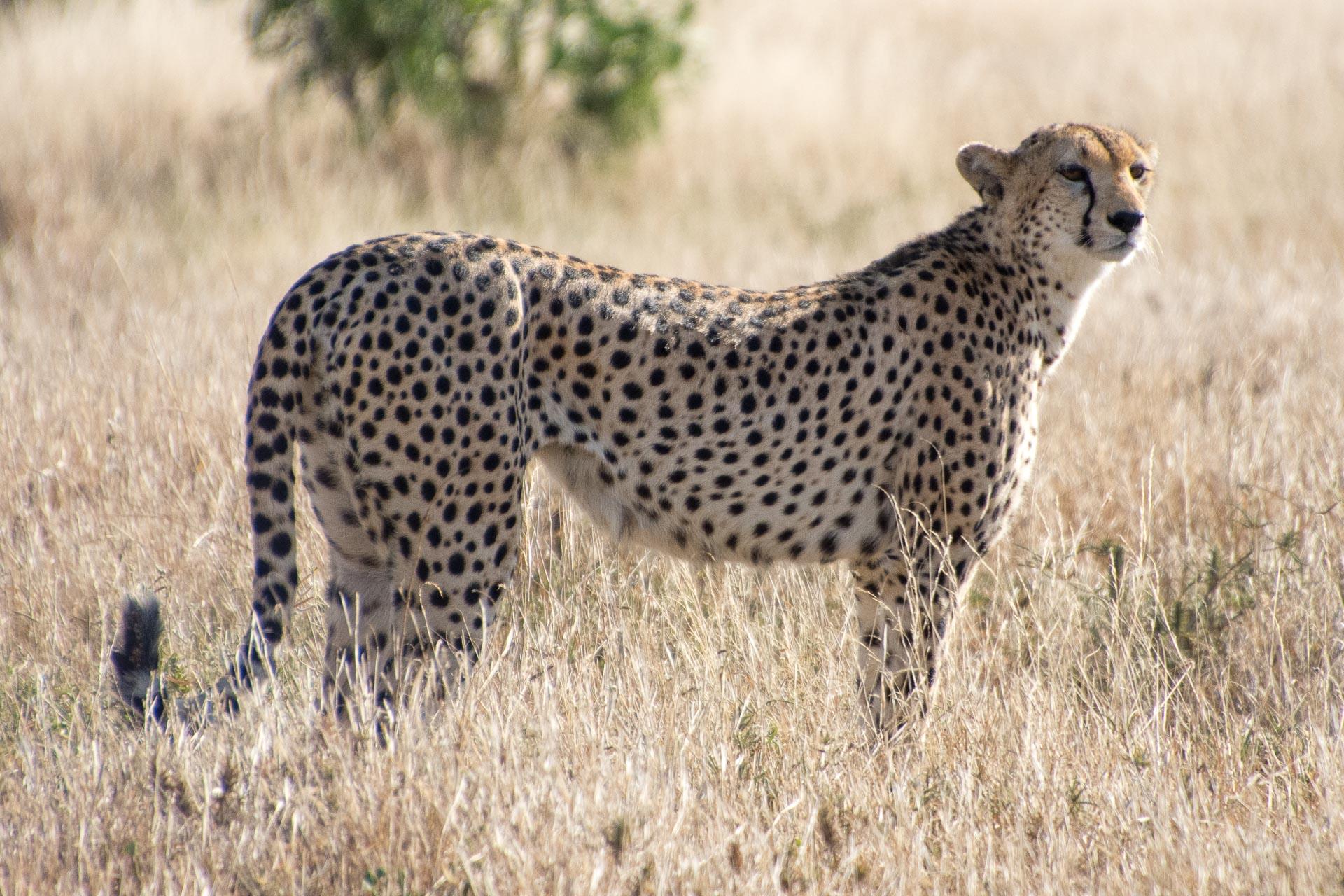 Tsavo-Nationalpark-Kenia-Globetrotter-Select-22