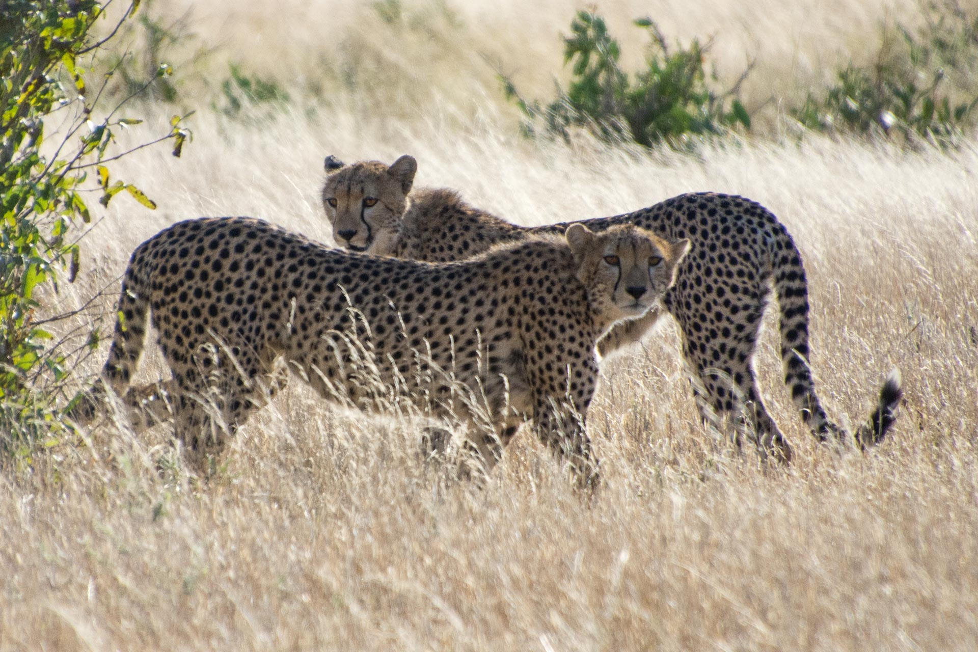 Tsavo-Nationalpark-Kenia-Globetrotter-Select-24
