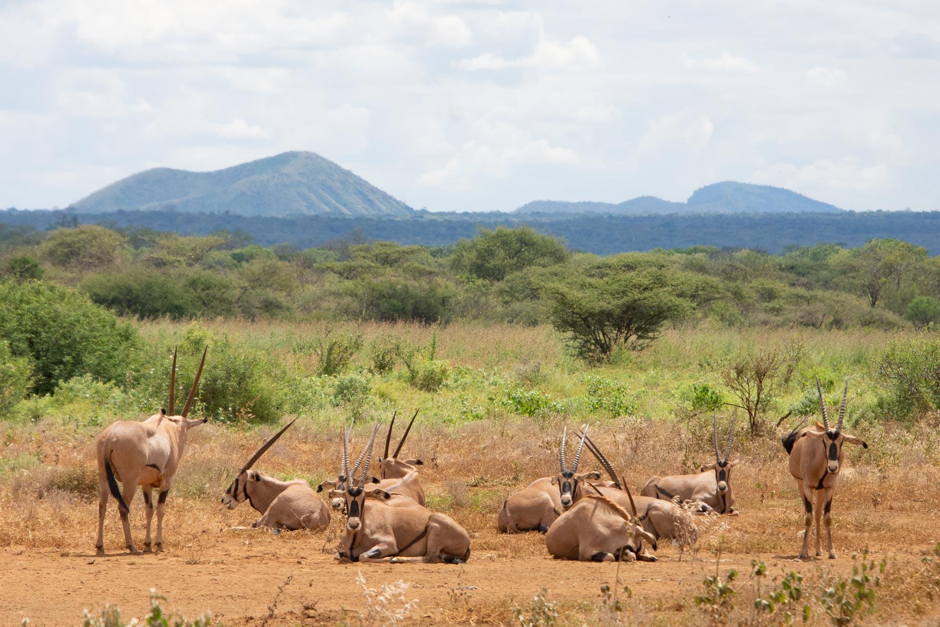 Tsavo-Nationalpark-Kenia-Globetrotter-Select-29