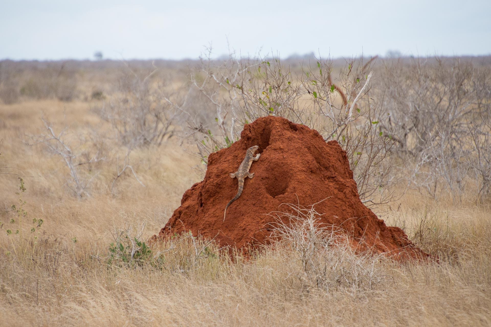Tsavo-Nationalpark-Kenia-Globetrotter-Select-3