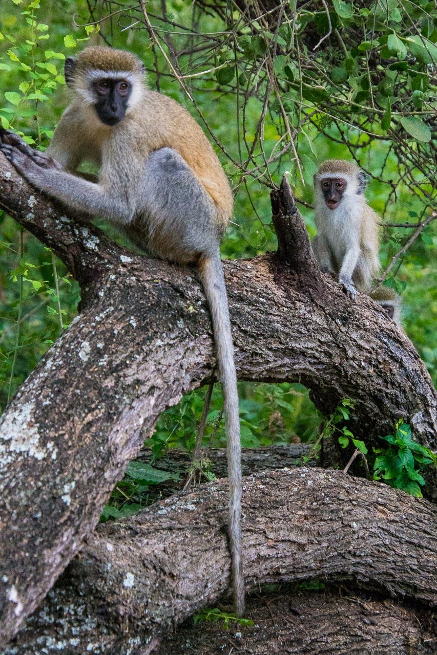 Tsavo-Nationalpark-Kenia-Globetrotter-Select-31