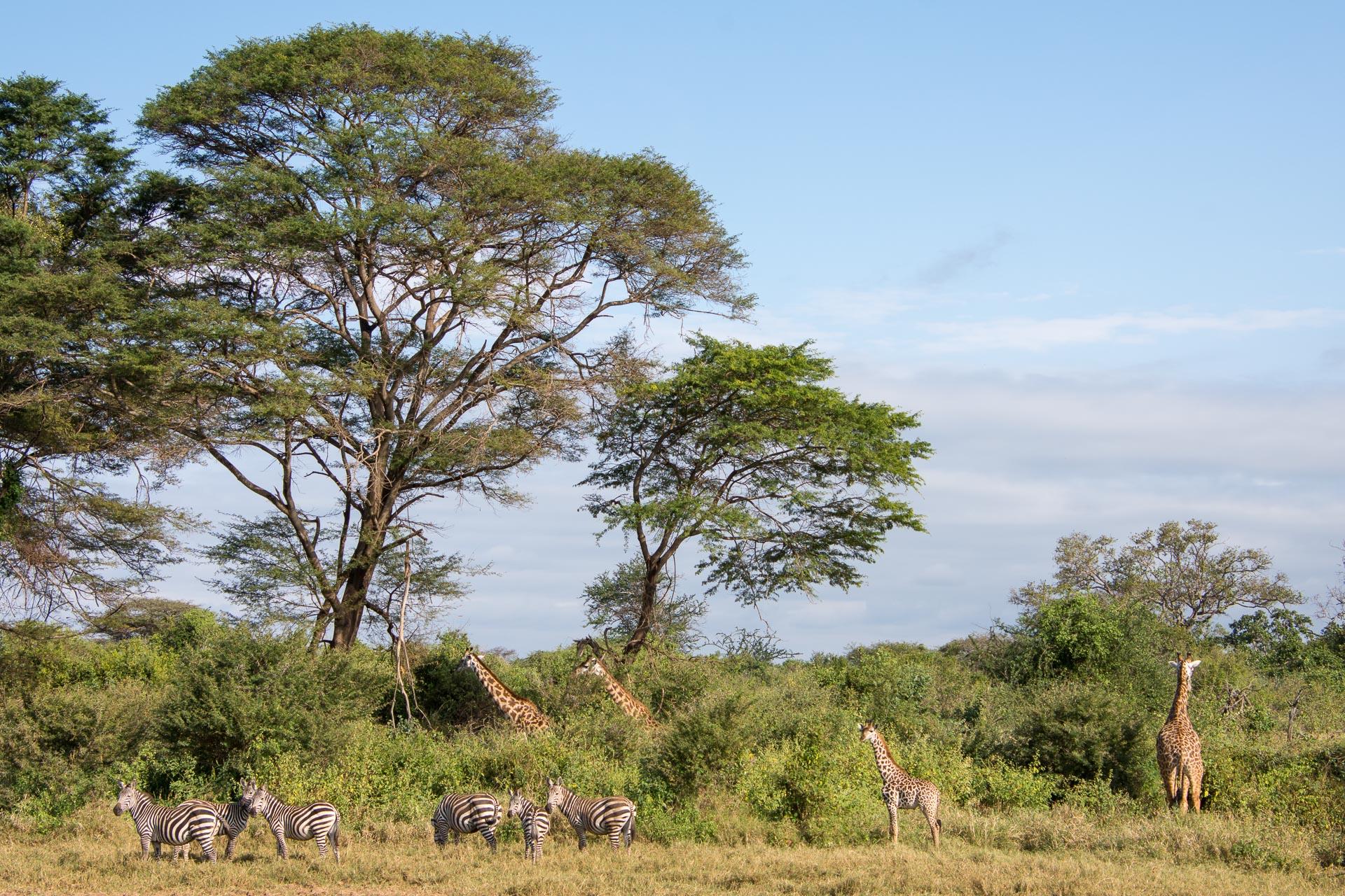 Tsavo-Nationalpark-Kenia-Globetrotter-Select-35