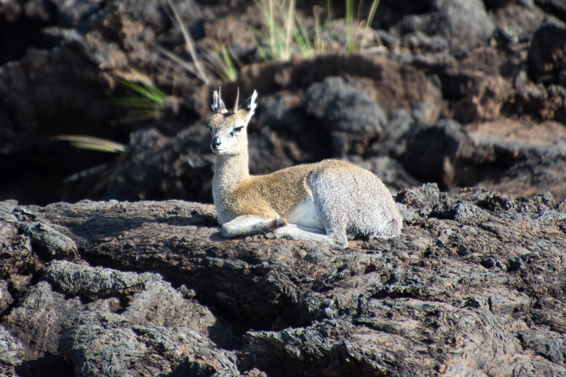 Tsavo-Nationalpark-Kenia-Globetrotter-Select-38