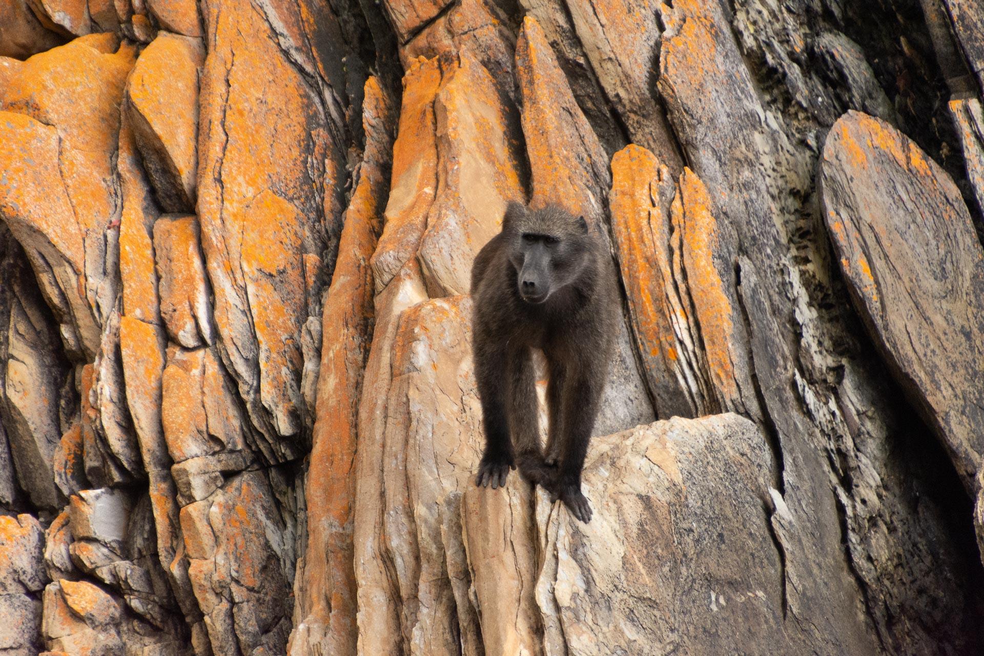 Tsitsikamma-Nationalpark-Suedafrika-Globetrotter-Select-5